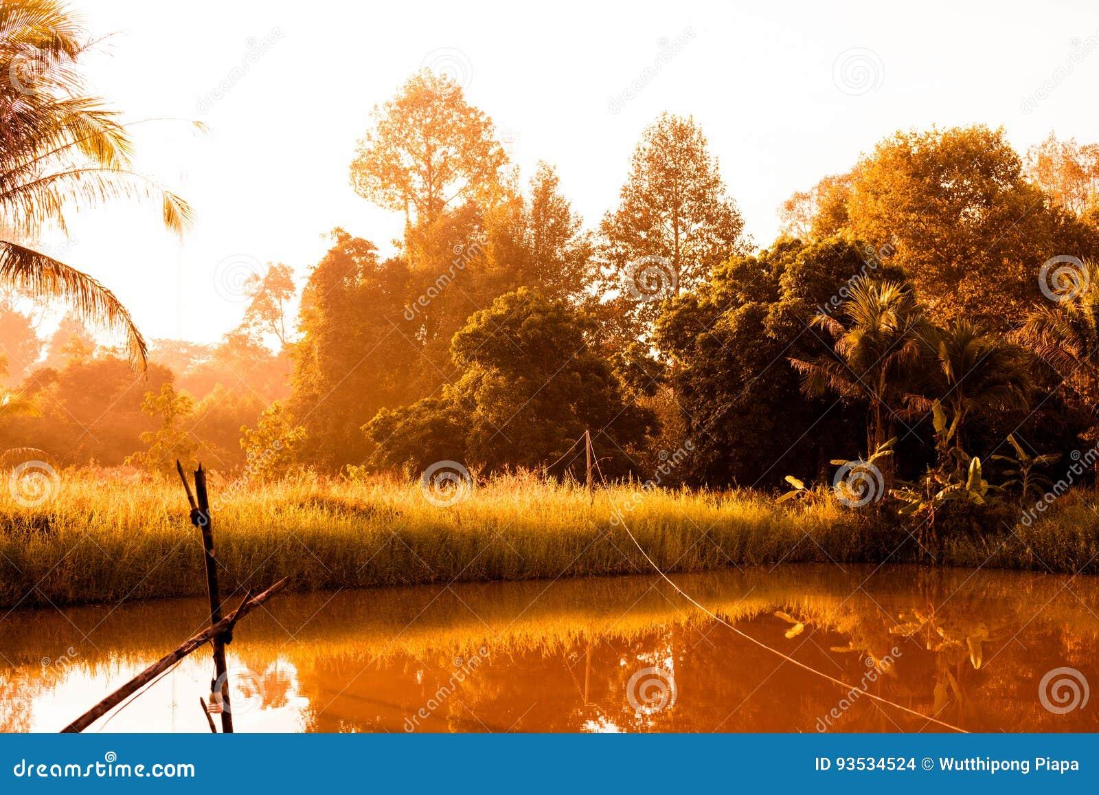 在国家太阳上升视图的沼泽