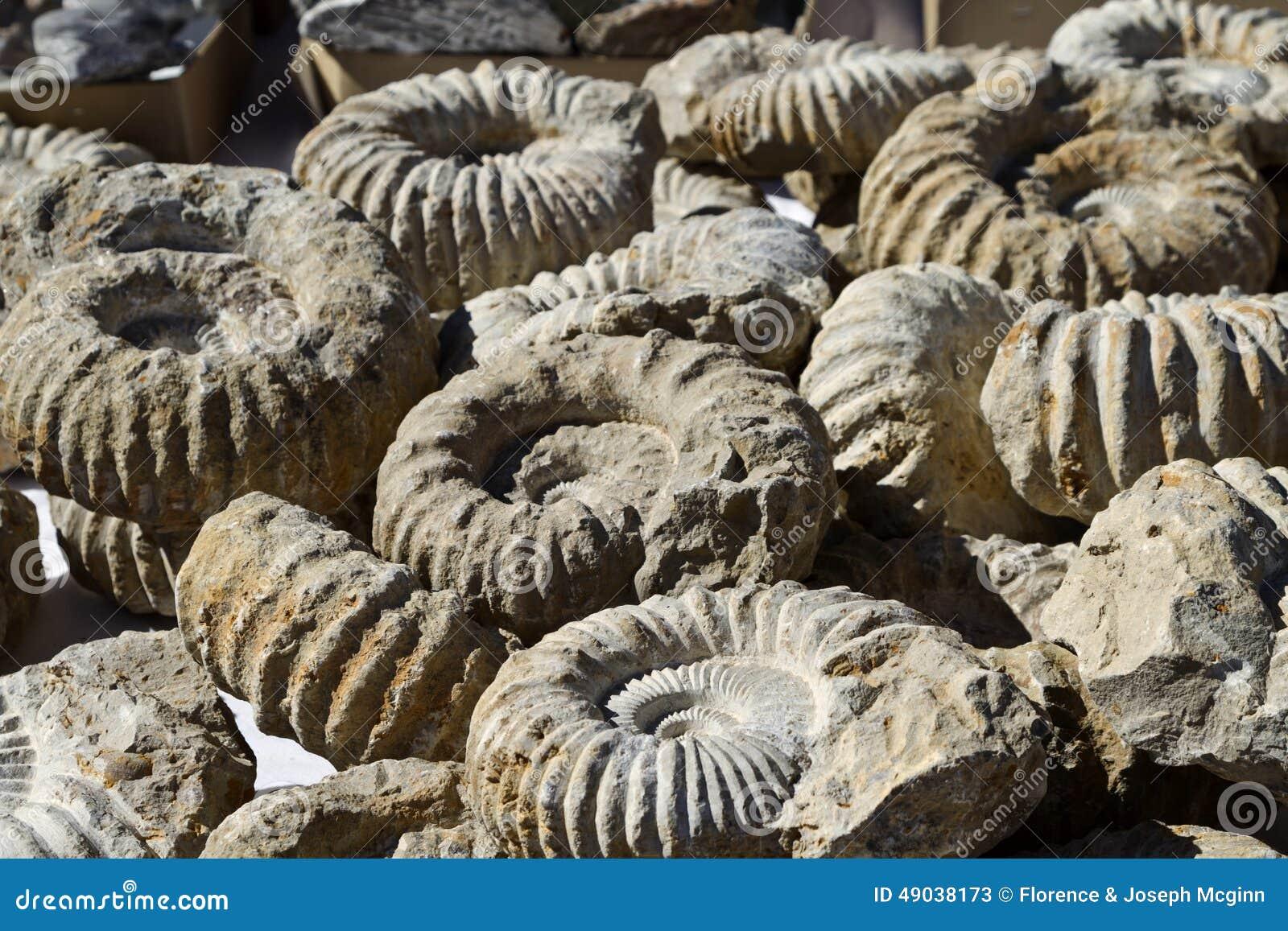 在图森宝石和矿物展示的化石