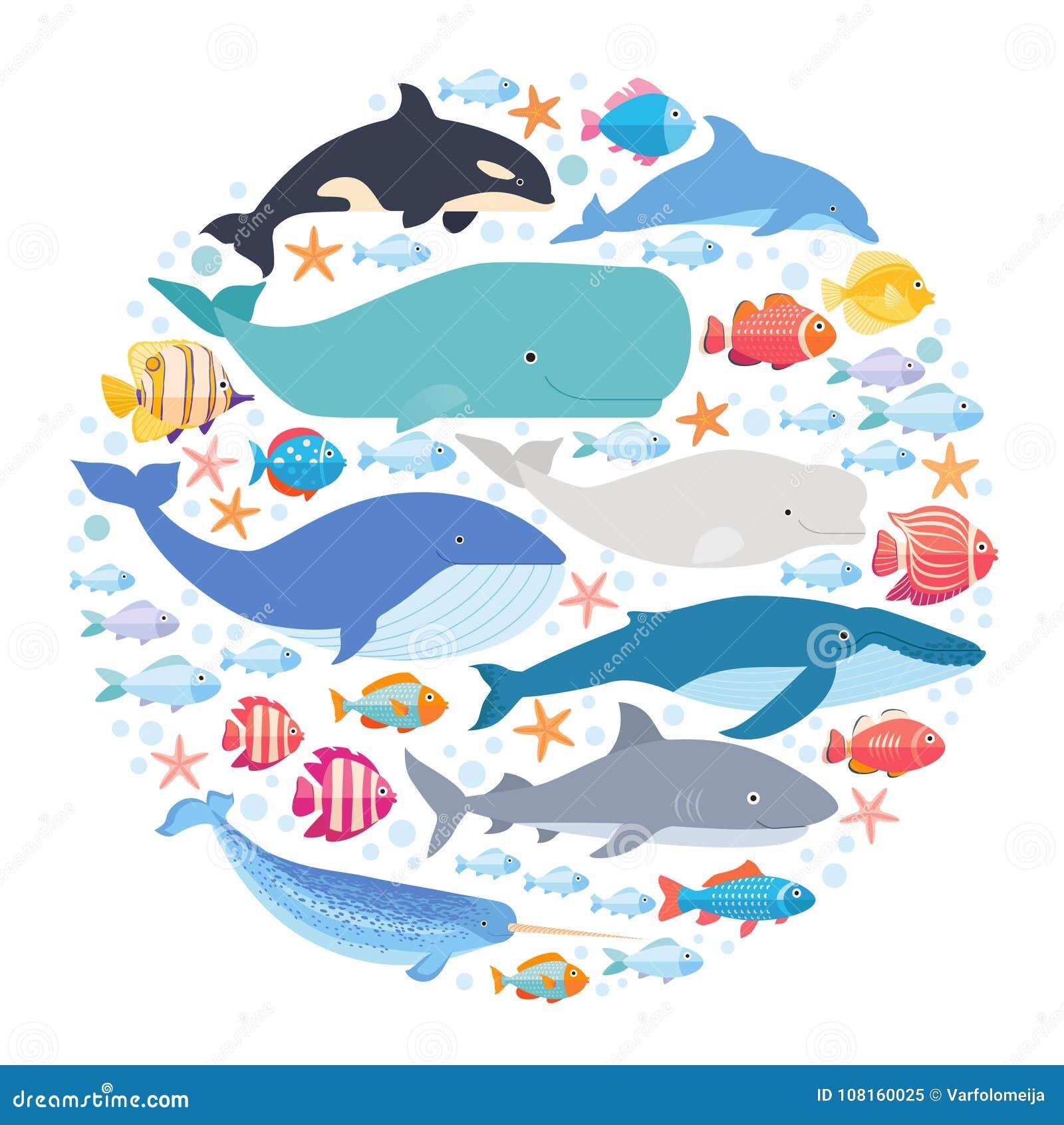 在圈子设置的海洋哺乳动物和鱼 Narwhal、蓝鲸、海豚、白海豚鲸鱼、驼背鲸、鲸鱼和精液