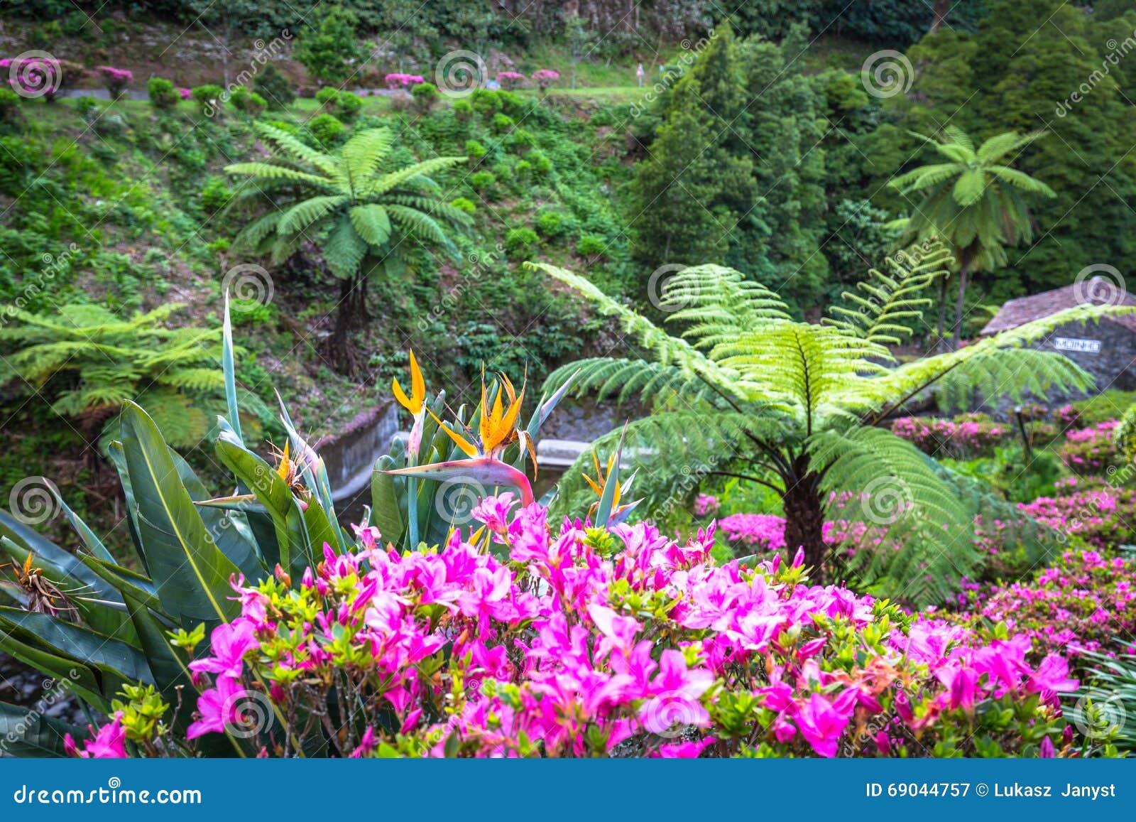 在圣地米格尔海岛,亚速尔群岛上的庭院 它位于中间