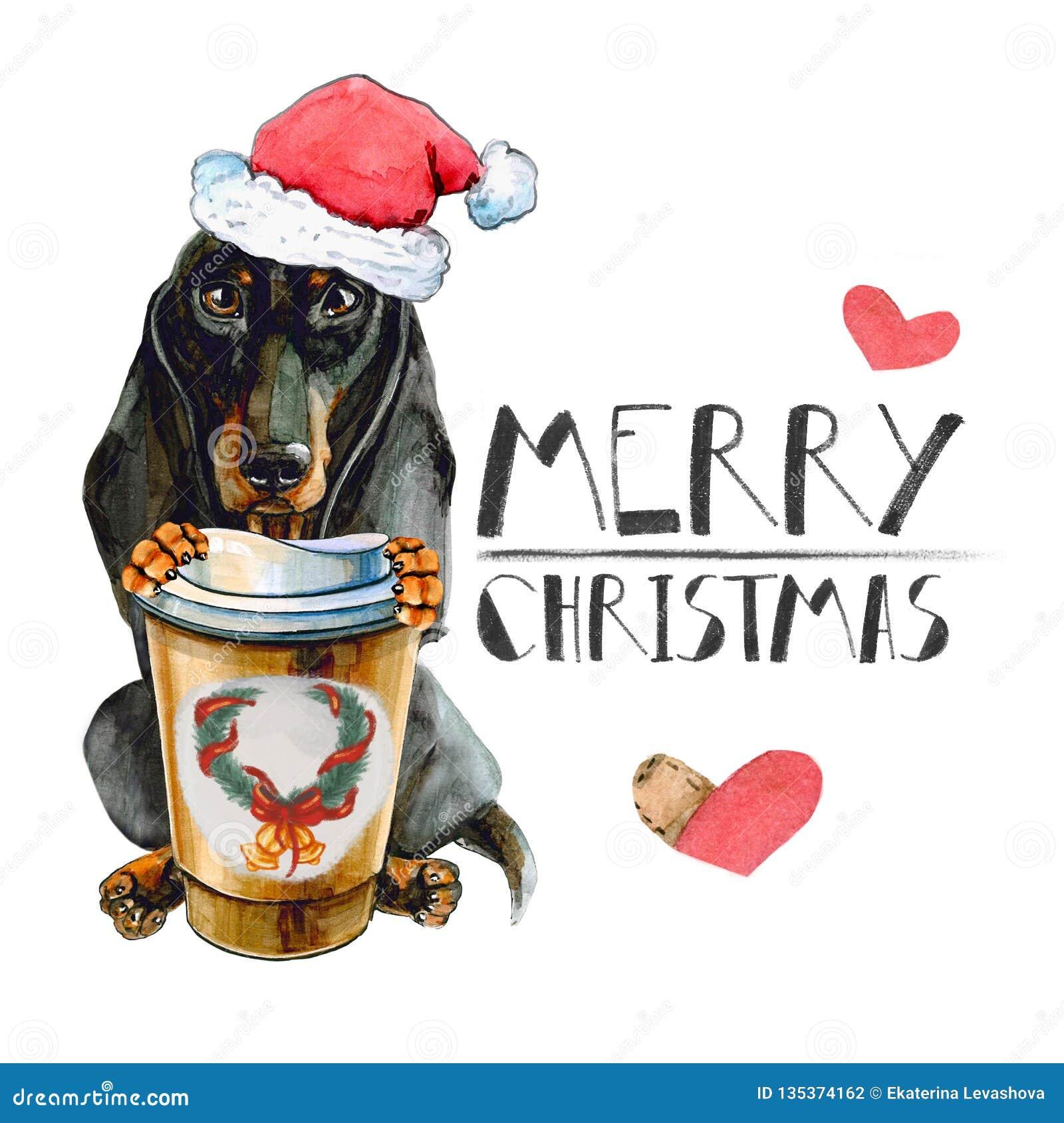 在圣诞老人项目圣诞节帽子的达克斯猎犬狗,有一杯温暖的咖啡的 背景查出的白色