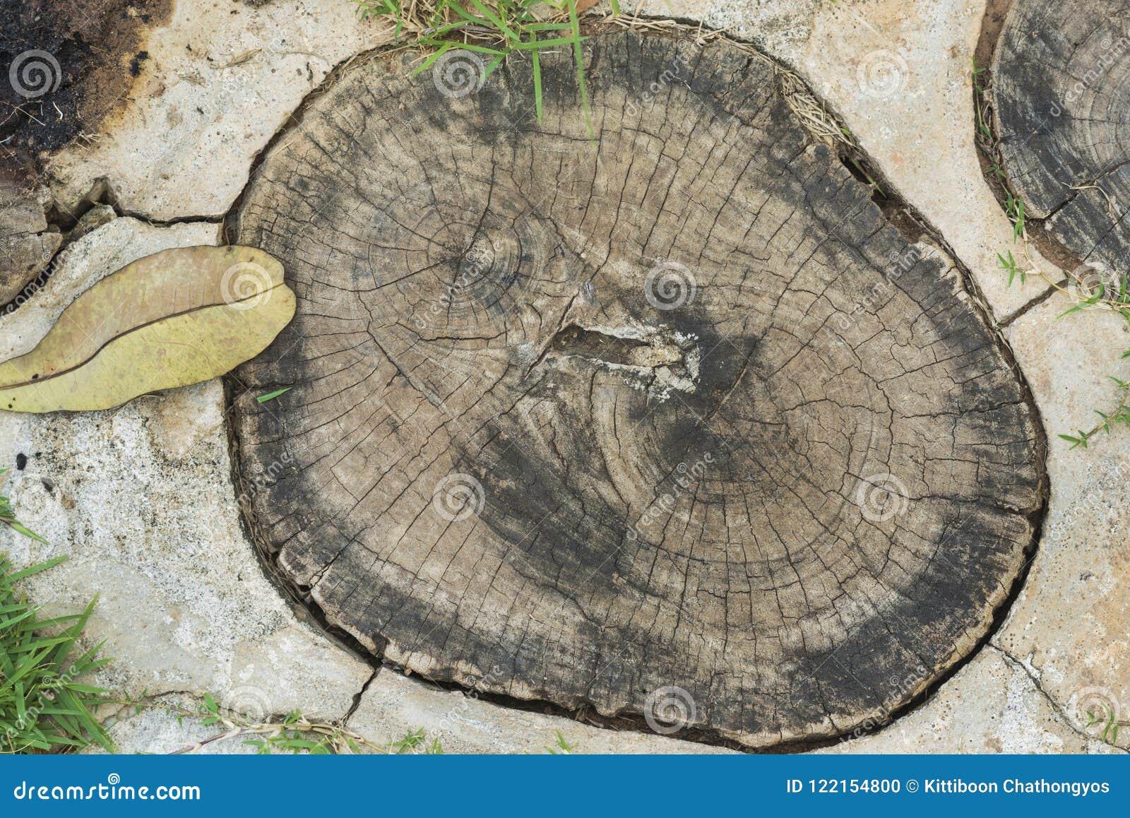 在地板上的树干圆环