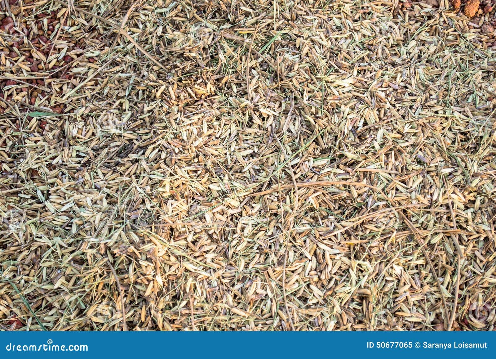 Download 在地板上的稻秸杆 库存图片. 图片 包括有 被围绕的, 贫瘠, 农场, 背包, 甚而, 乡下, 问题的, 修改 - 50677065