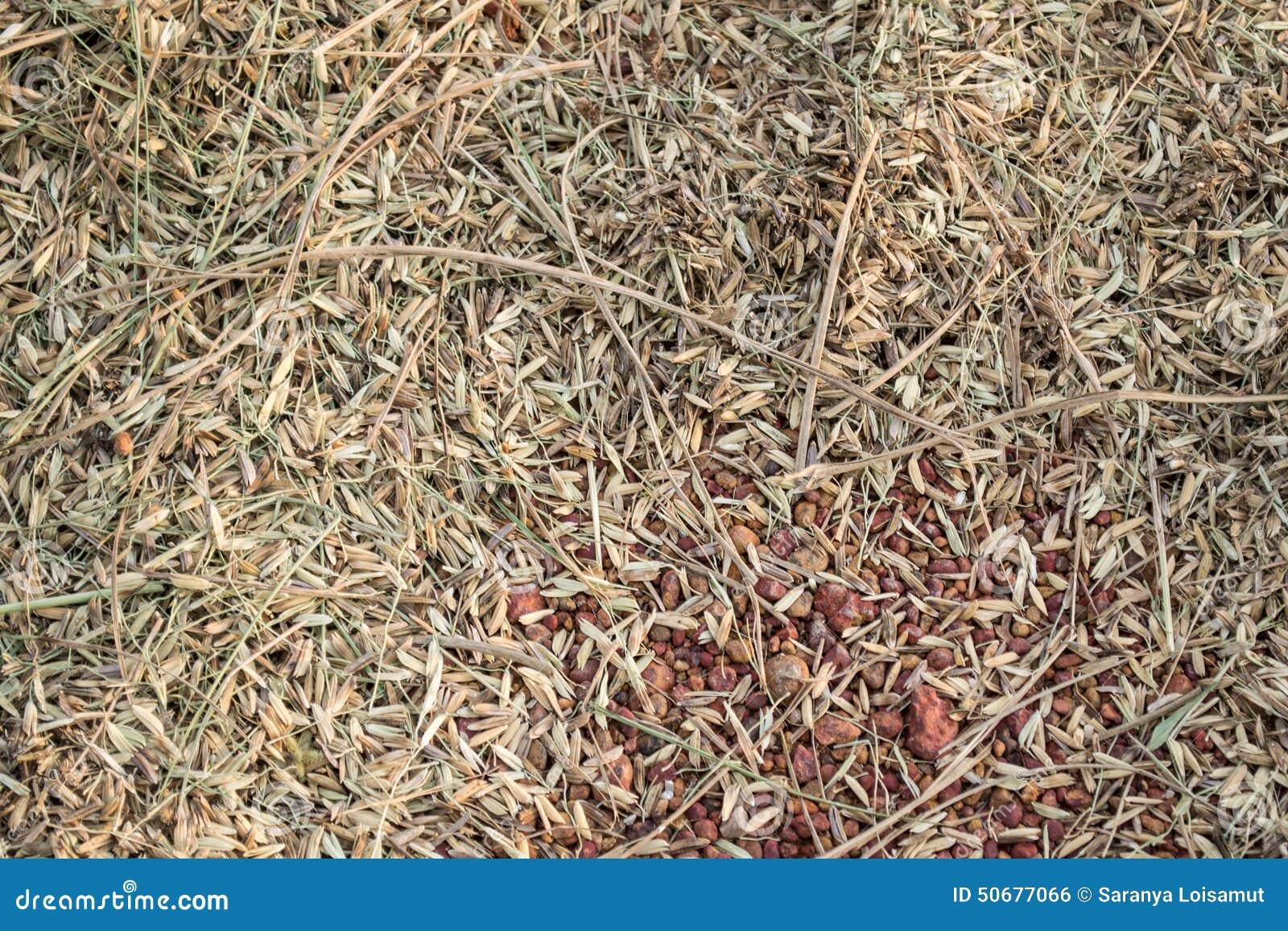 Download 在地板上的稻秸杆 库存照片. 图片 包括有 贫瘠, 乡下, 洪水, 种田, 背包, 住宅, 痛苦, 甚而 - 50677066