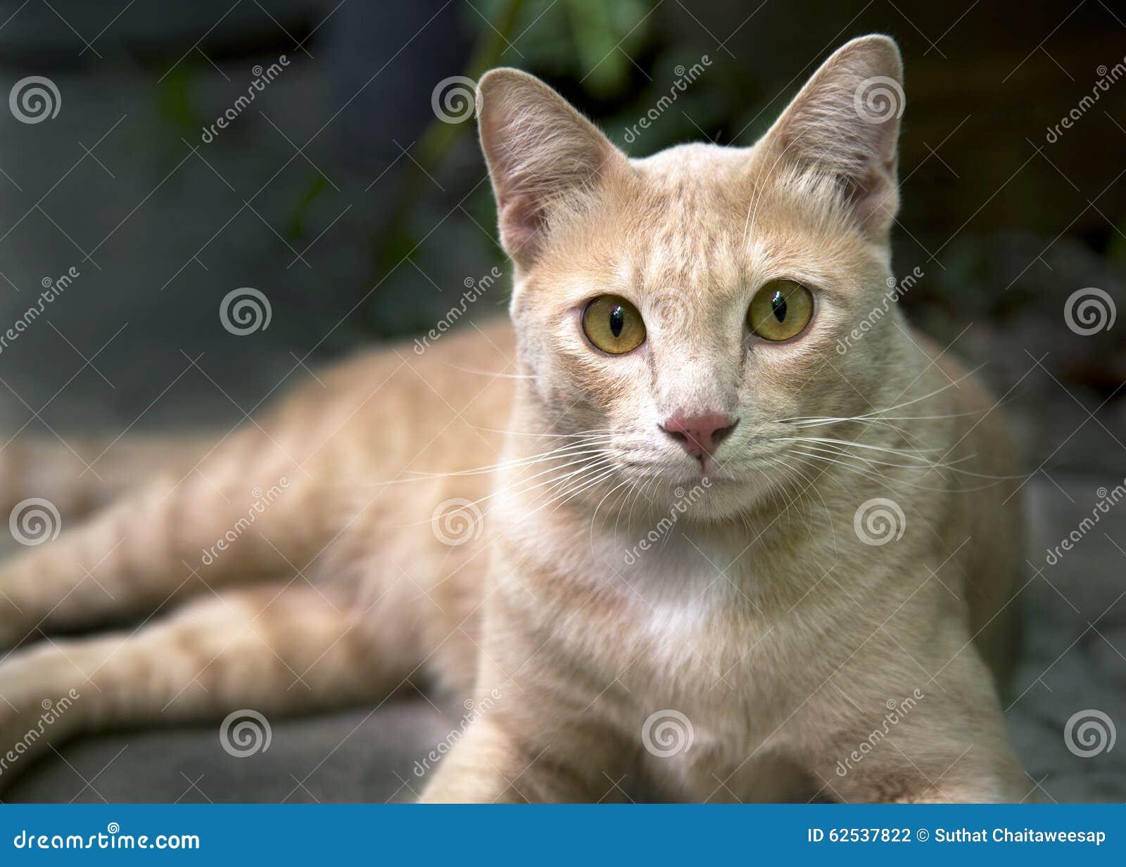 在地板放置的橙色猫