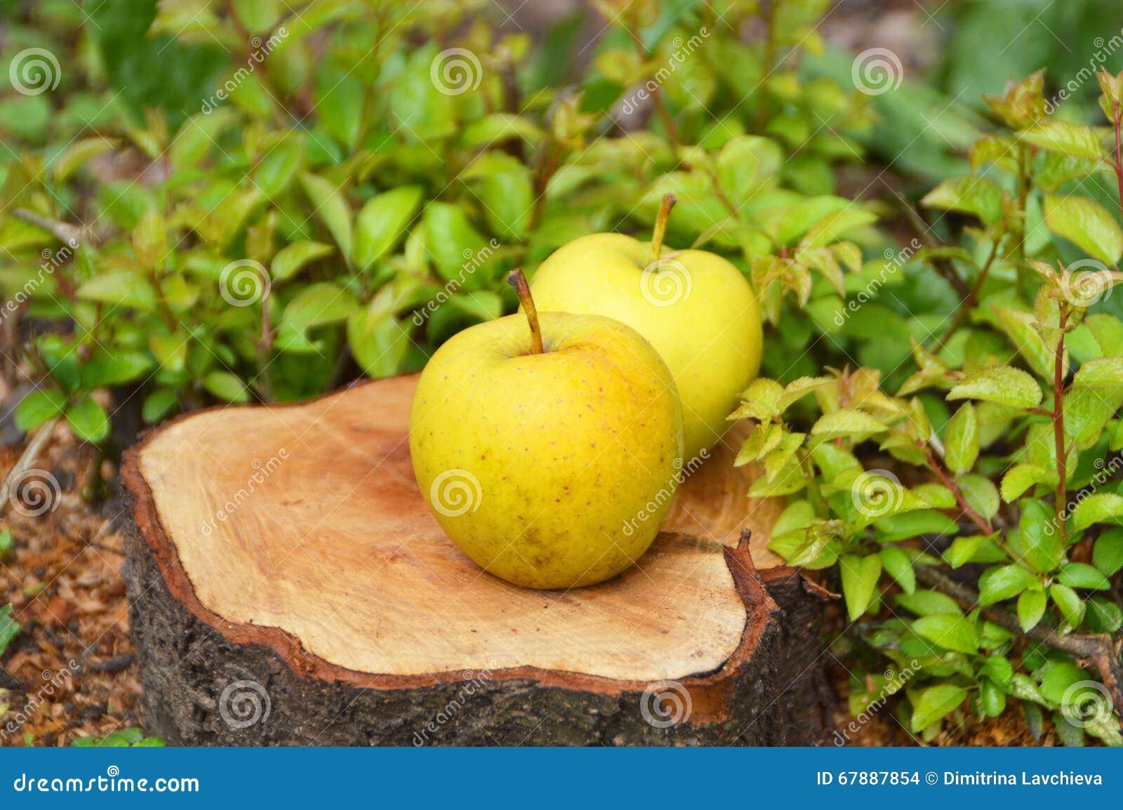 在地面上的两个黄色苹果