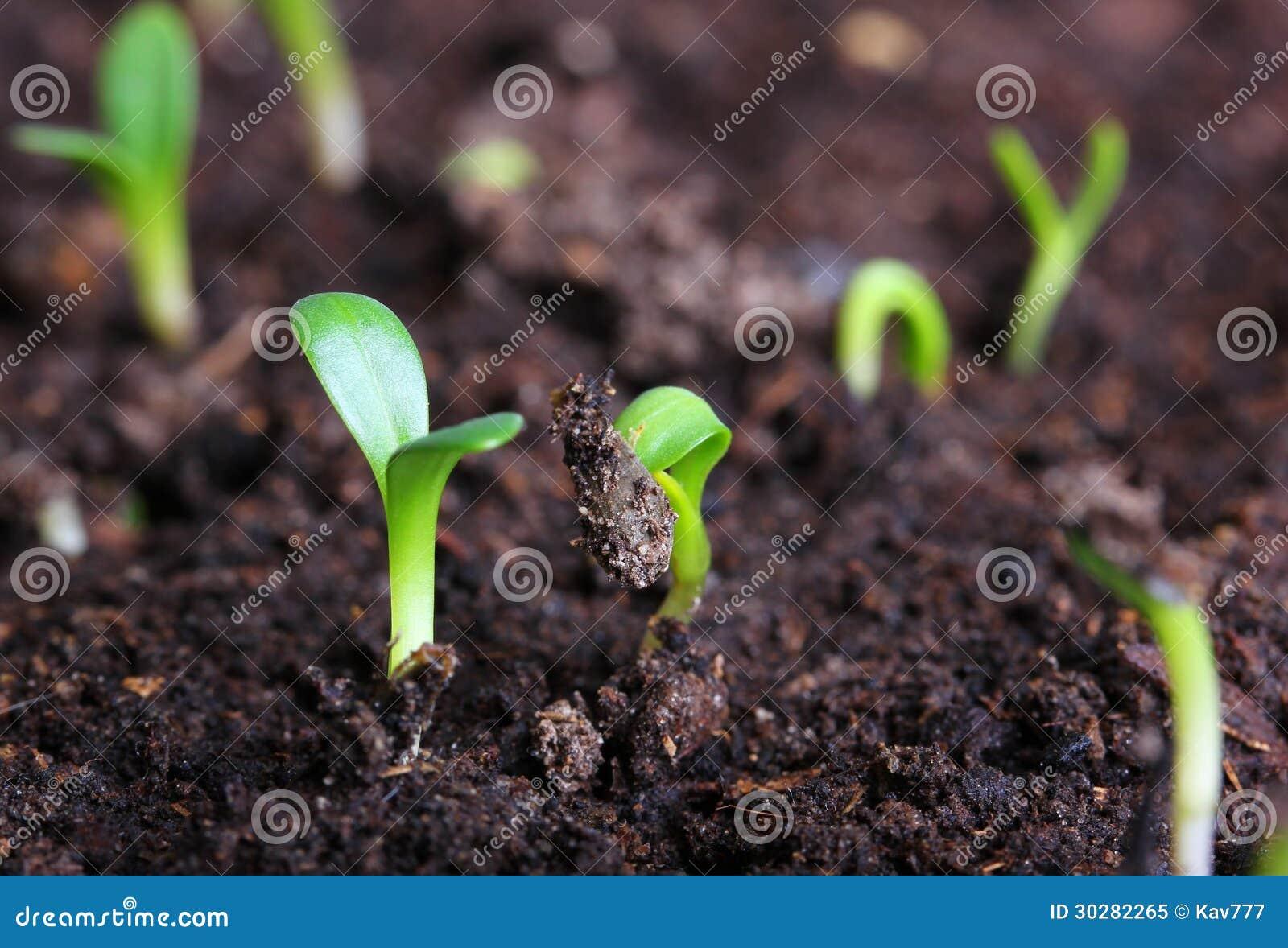 小绿色幼木