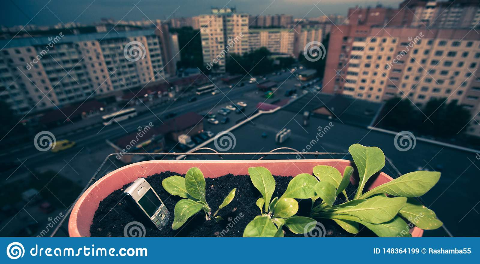 在地面neard绿色植物外面的手机棍子一个罐的在阳台的花