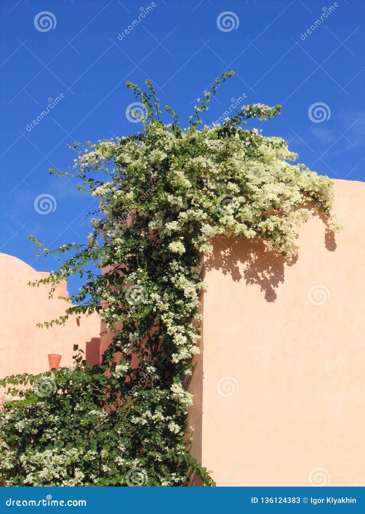 在埃及建筑学墙壁上的美丽的开花植物