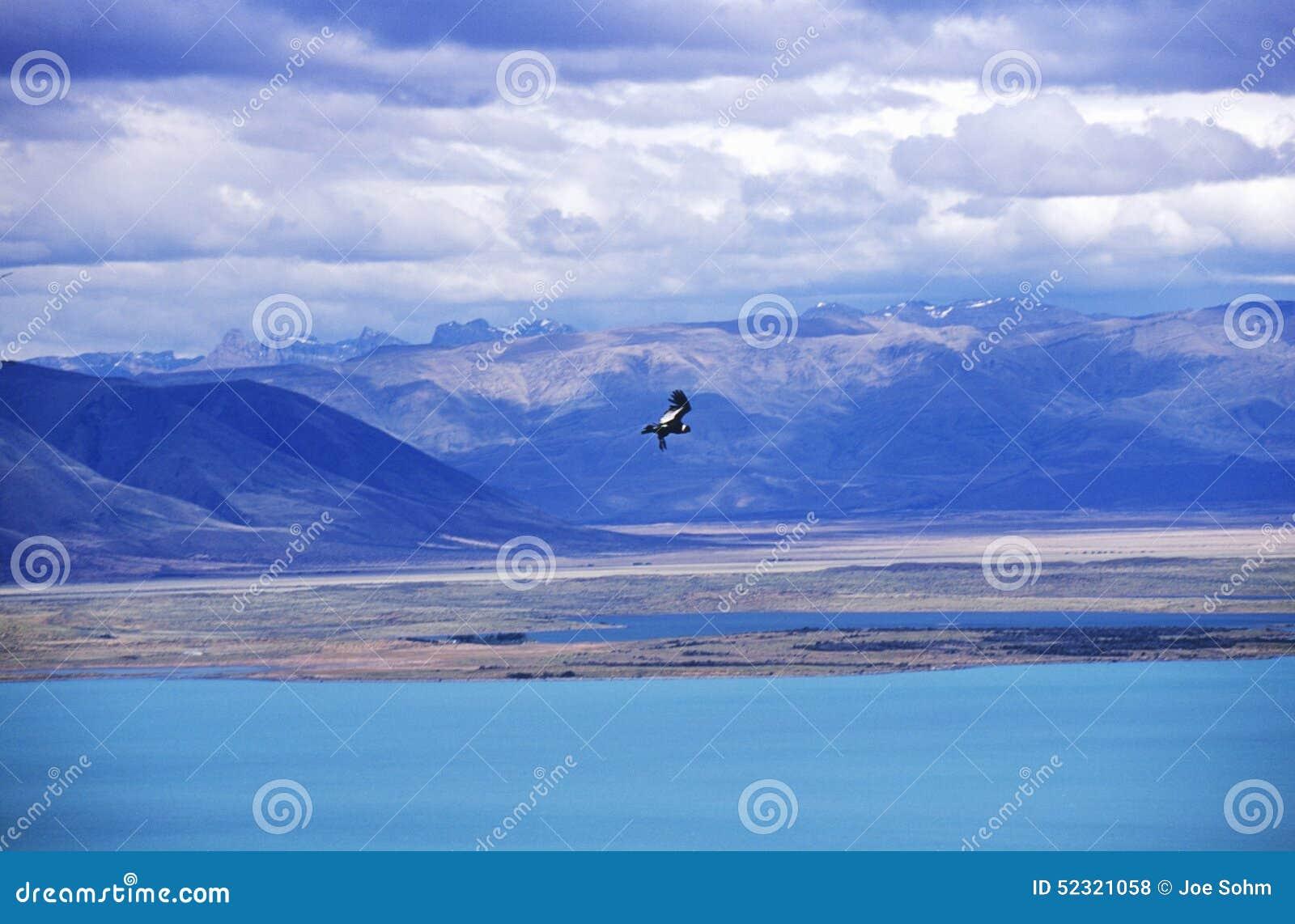 在埃尔卡拉法特,巴塔哥尼亚,阿根廷附近的在飞行中神鹰和安第斯山脉