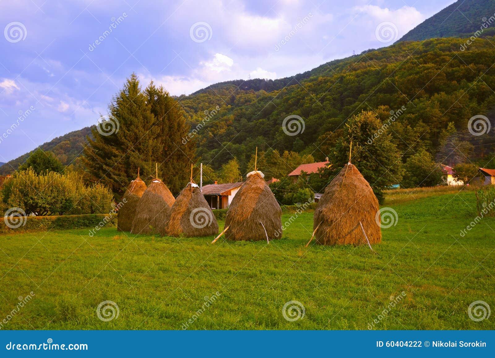 在堆的干草-村庄在塞尔维亚