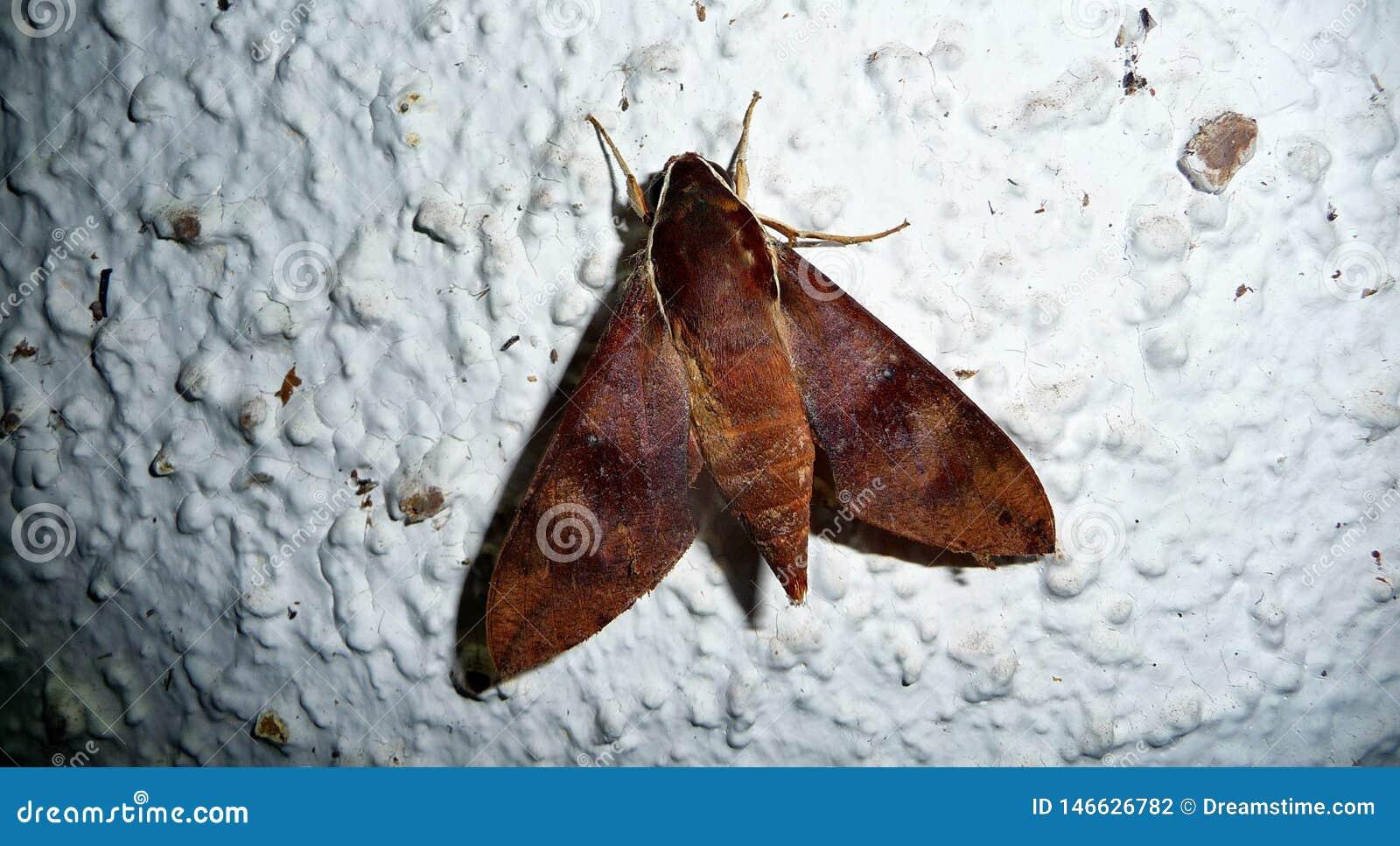 在墙壁上的大夜飞行在法属玻里尼西亚