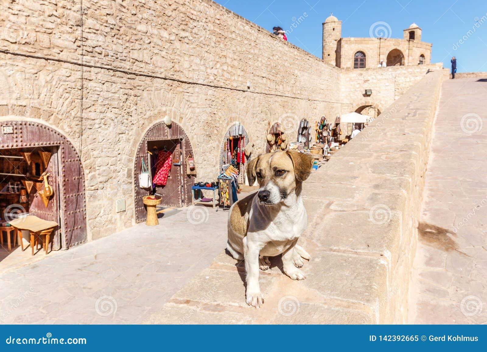 在墙壁上的狗在索维拉垒