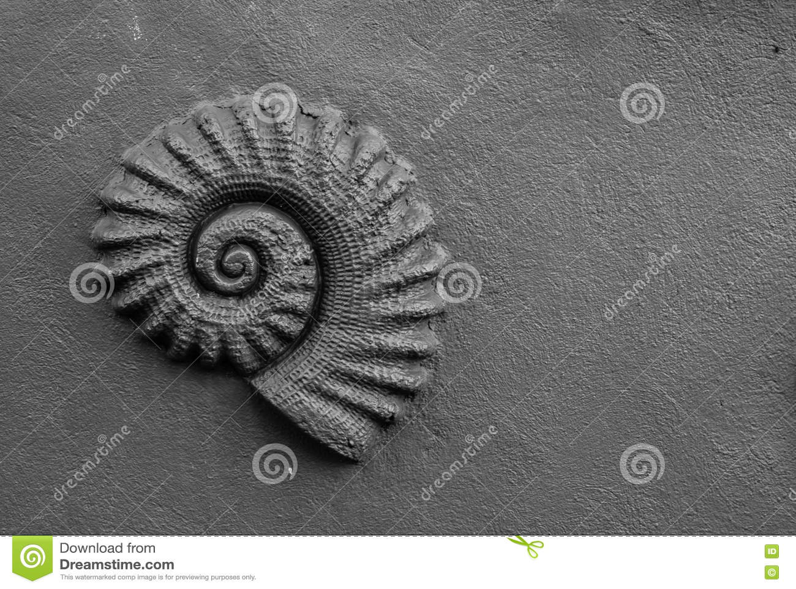 在墙壁上的贝壳fosil