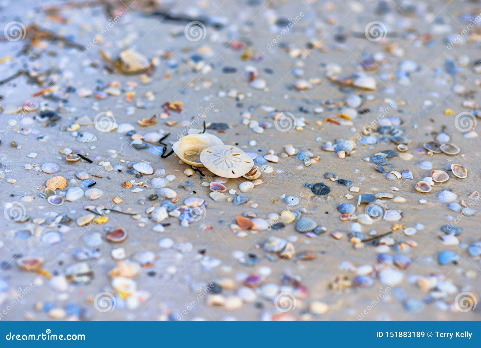 在墨西哥海滩的沙钱