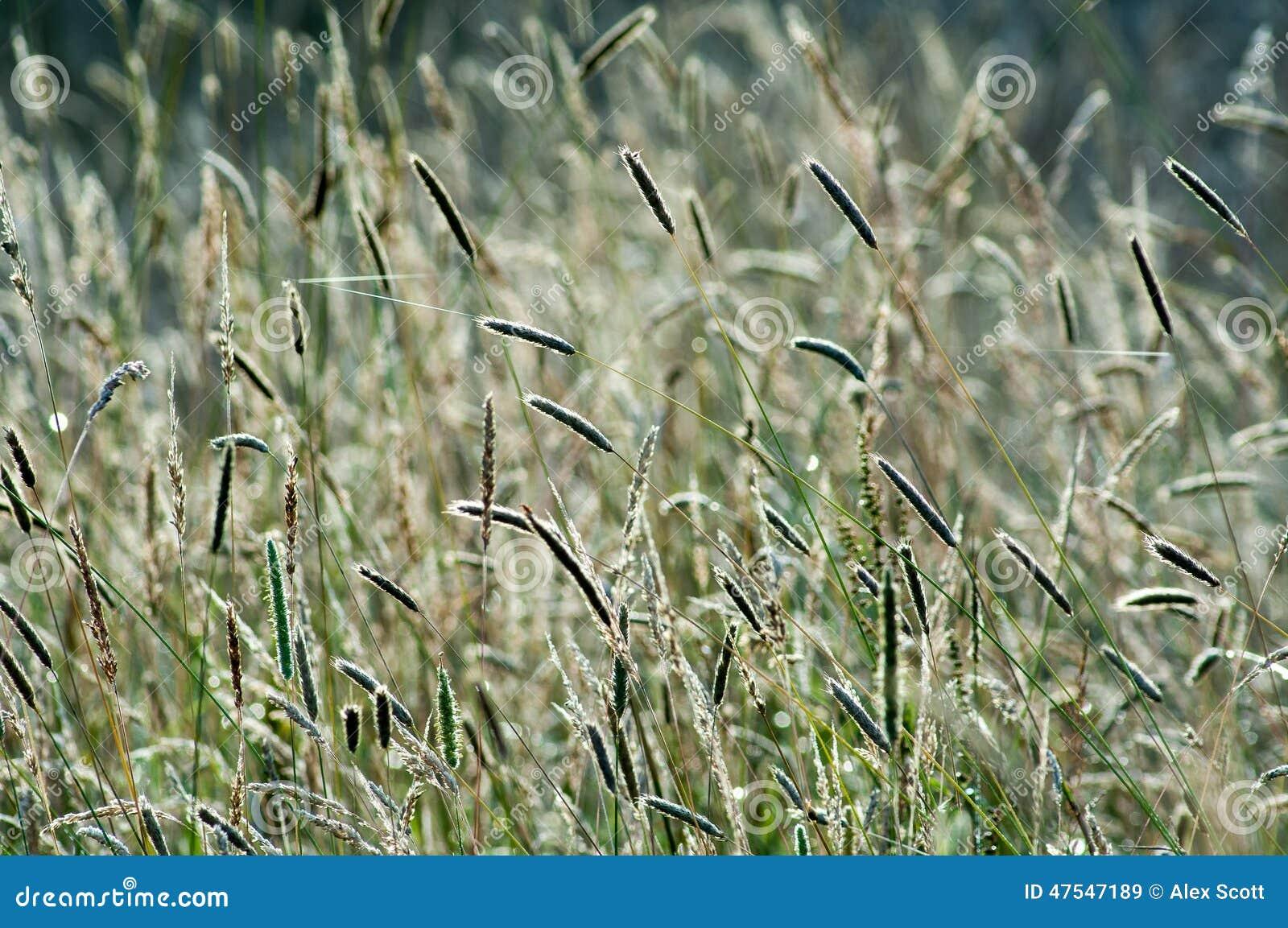 在夏天太阳光的野草