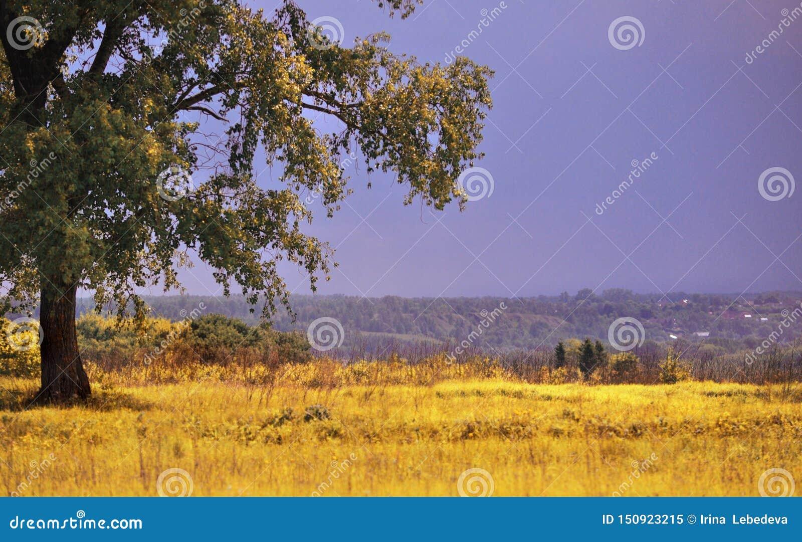 在夏天站立单独在一个领域的一棵大绿色树