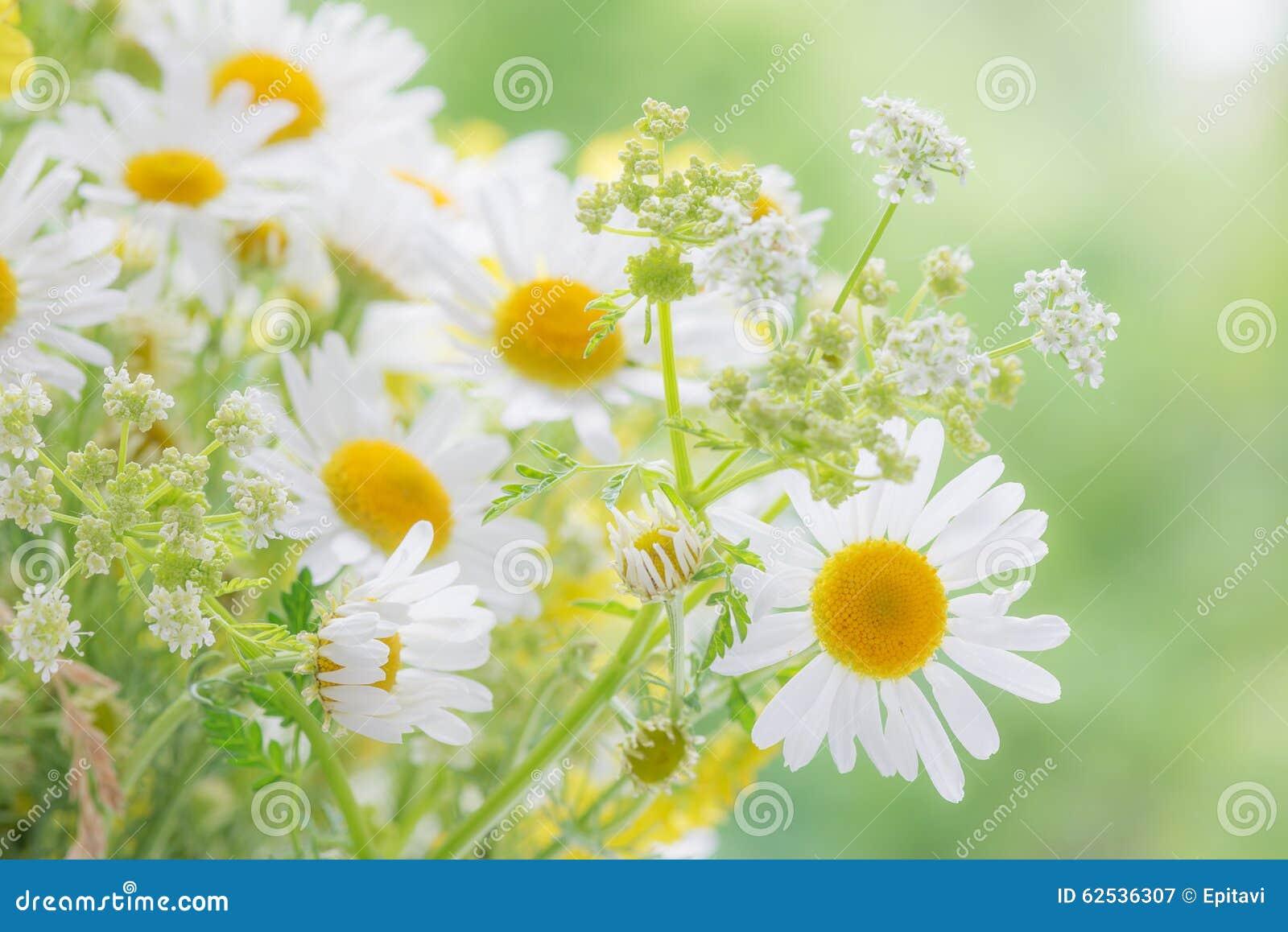在夏天草甸的野花