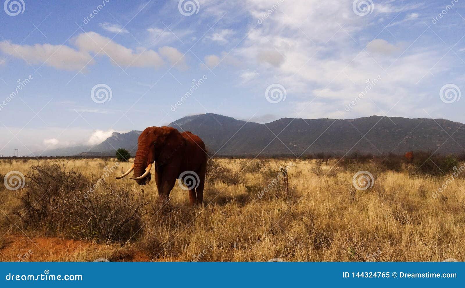 在夏季的大草原领域