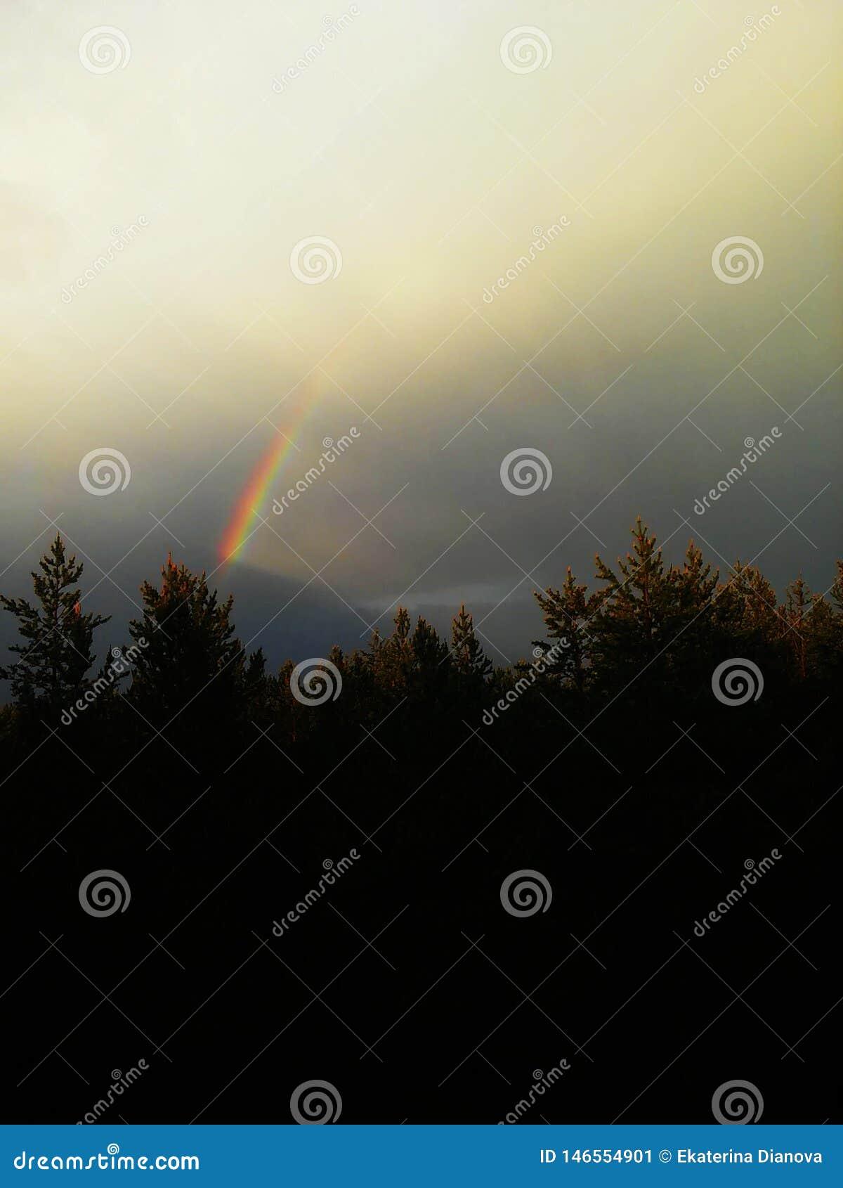 在多云天空的彩虹在森林