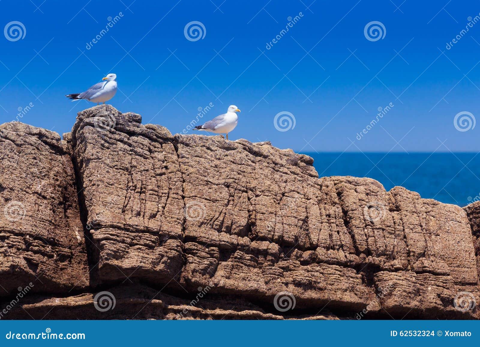 在多岩石的海滩的两只海鸥