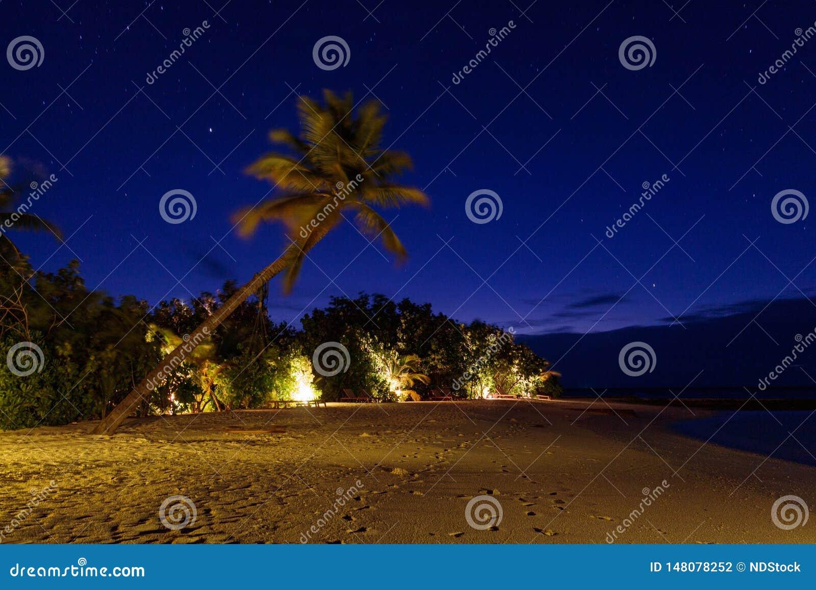 在夜期间,棕榈树的长的曝光图片和摇摆