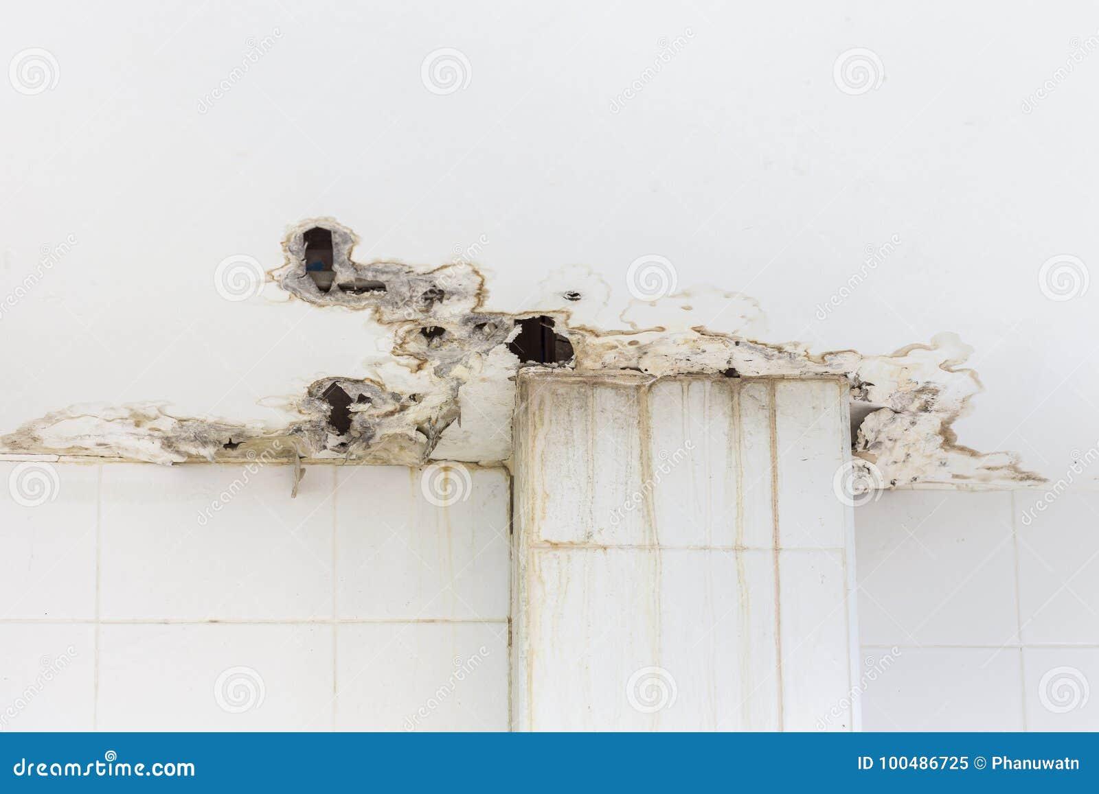 在大厦里面的天花板得到损坏显示湿气和dir