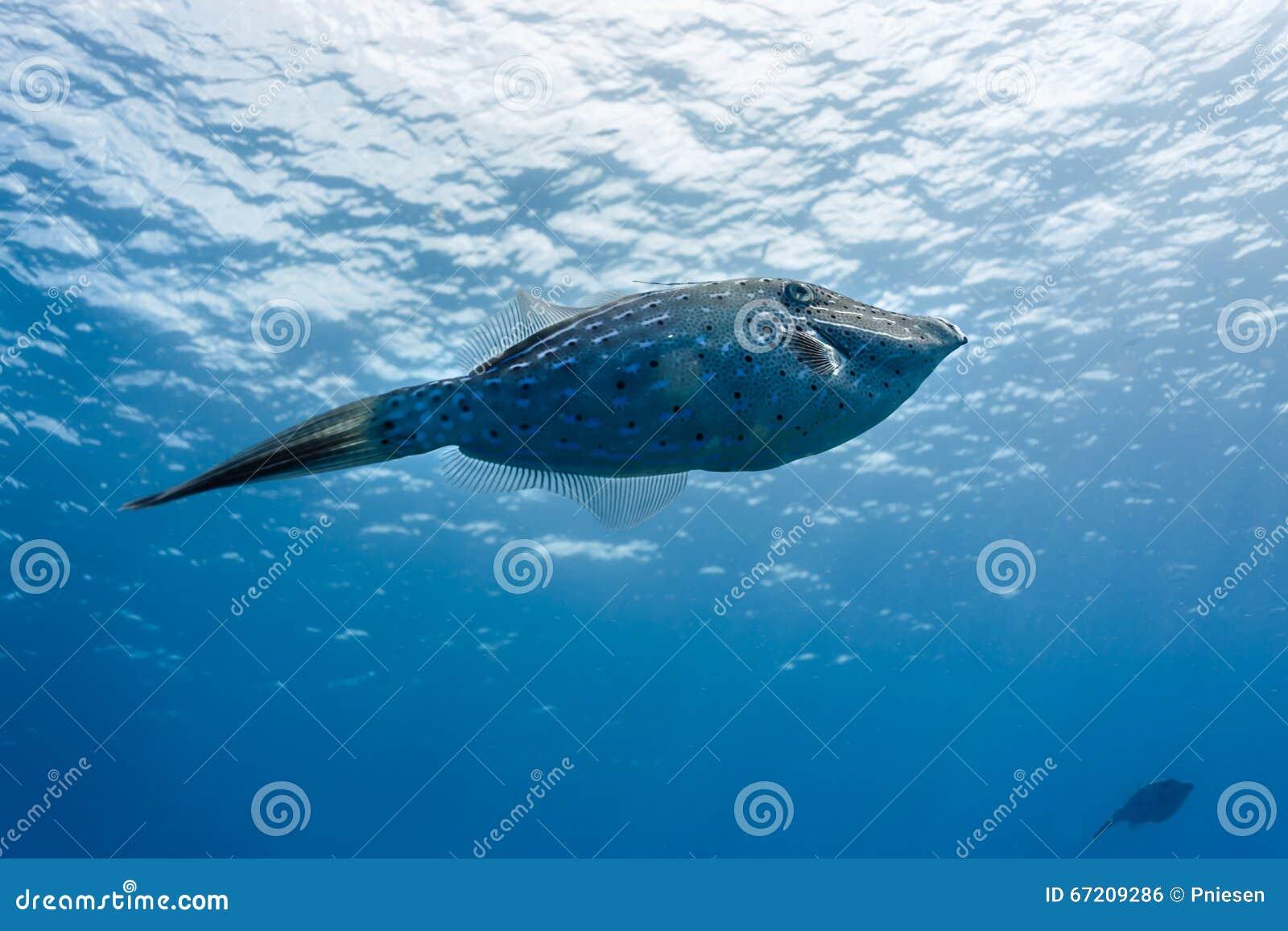 梦到大海里游泳被鱼咬