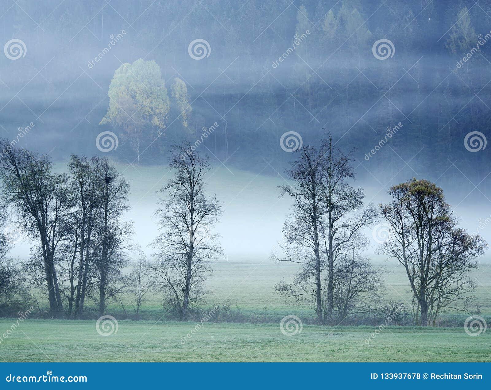 在大雾丢失的梦想的风景,瓦尔di Casies