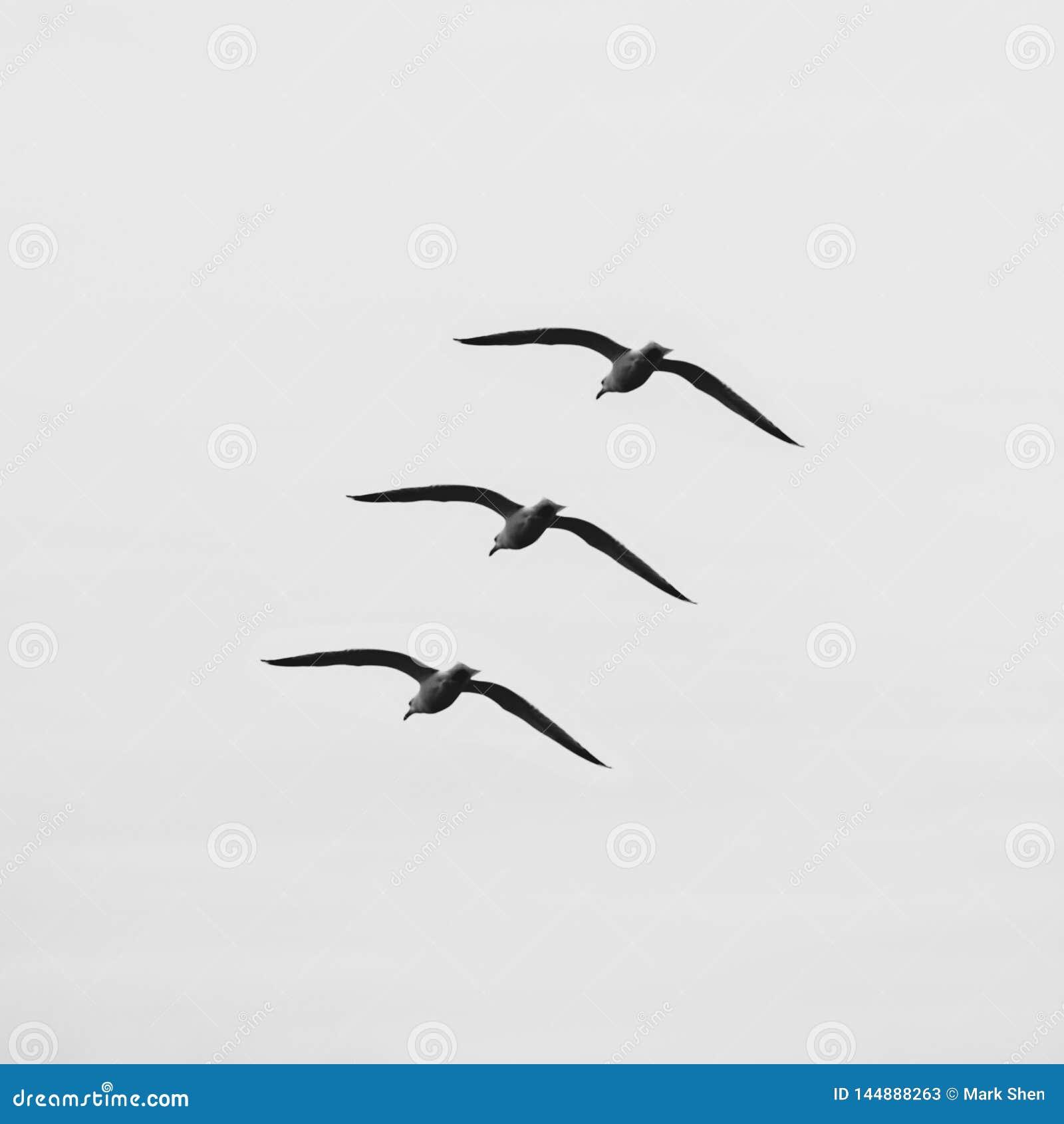 在天空的三只鸟