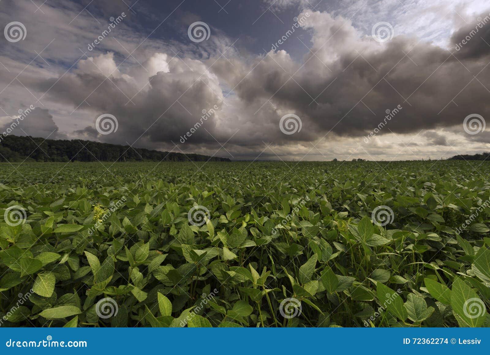 在天空的云彩在草甸