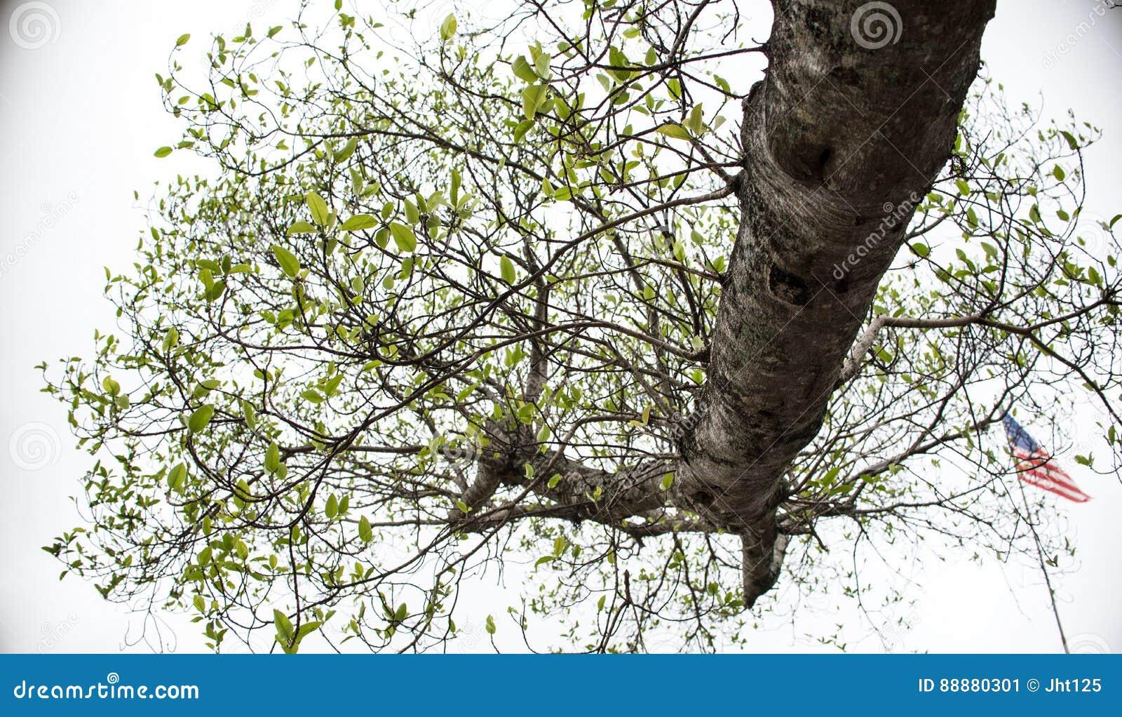 在天空的树枝