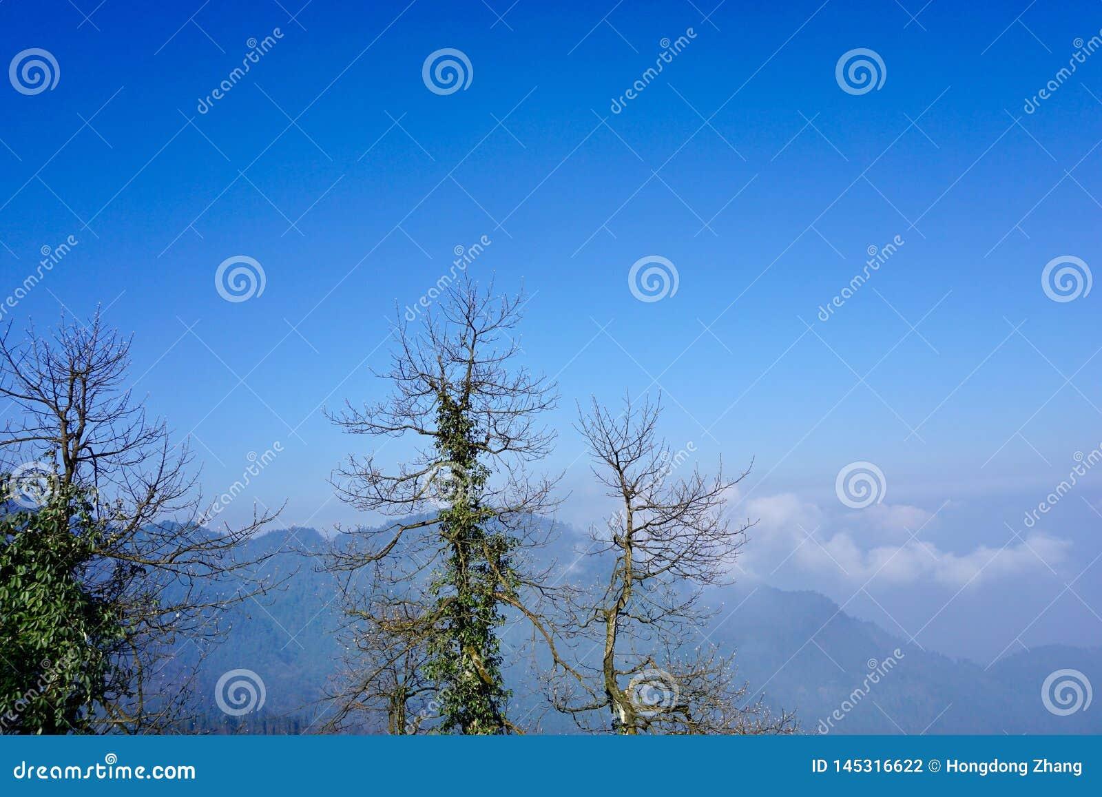 在天空蔚蓝下的山,一些棵死的树围拢绿色藤