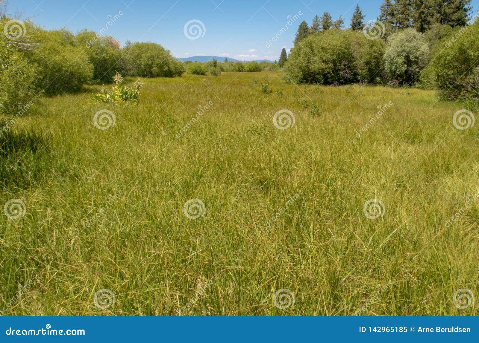 在太浩湖附近的一个蔓延的草甸
