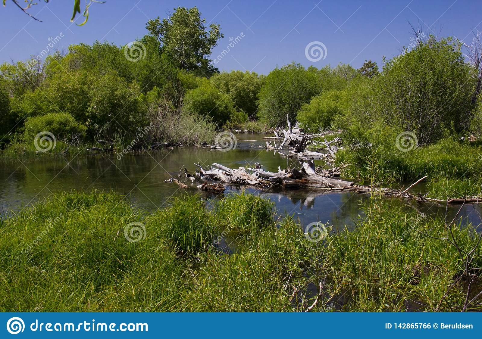 在太浩湖附近的沼泽