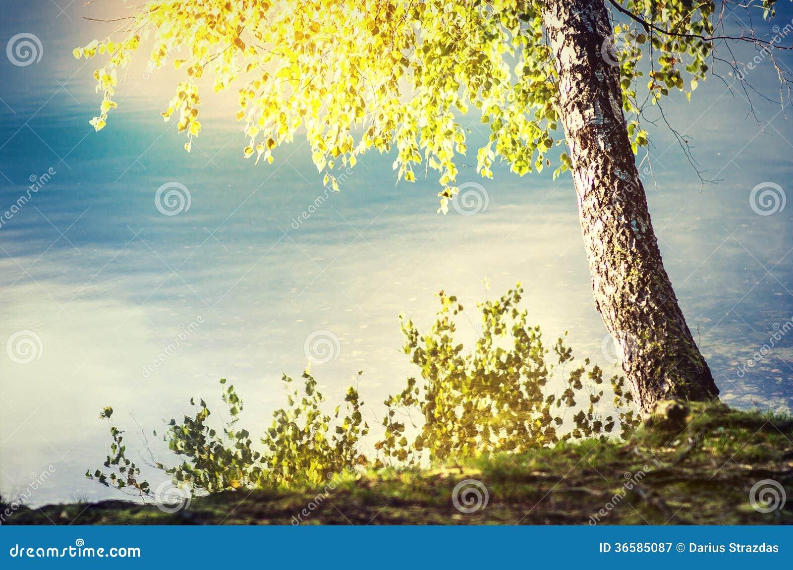 在太阳的湖边