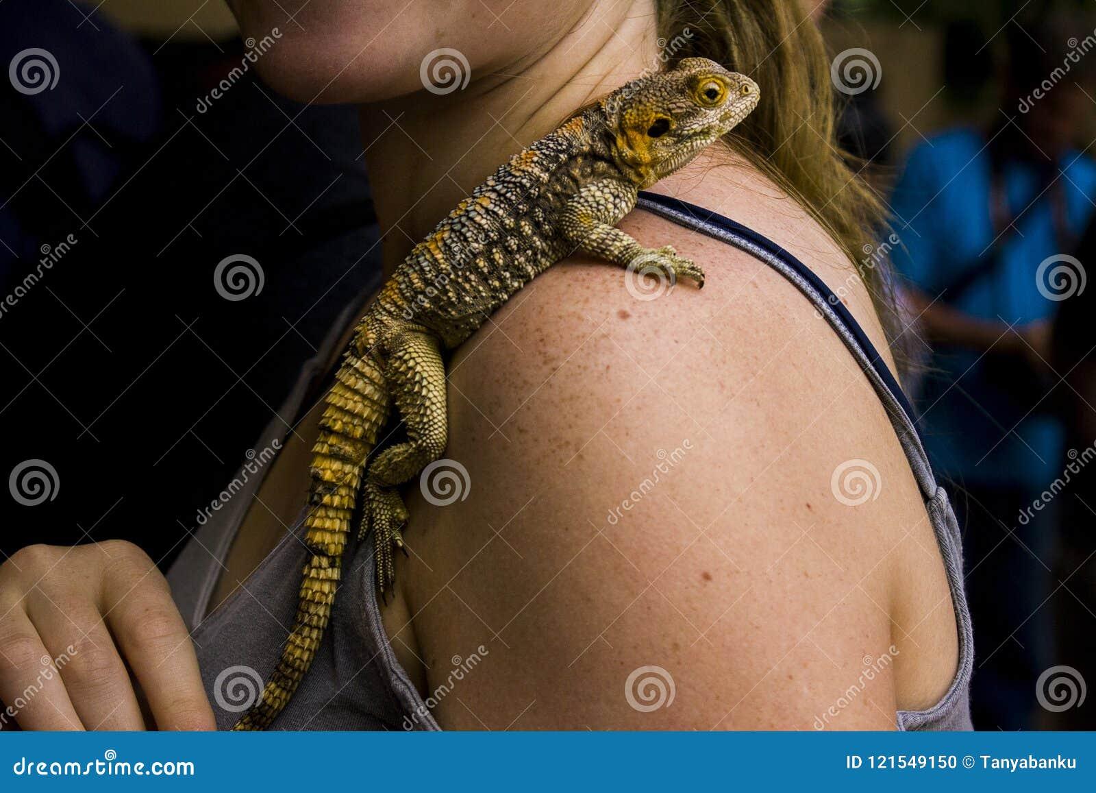 在妇女肩膀关闭的蜥蜴摄影