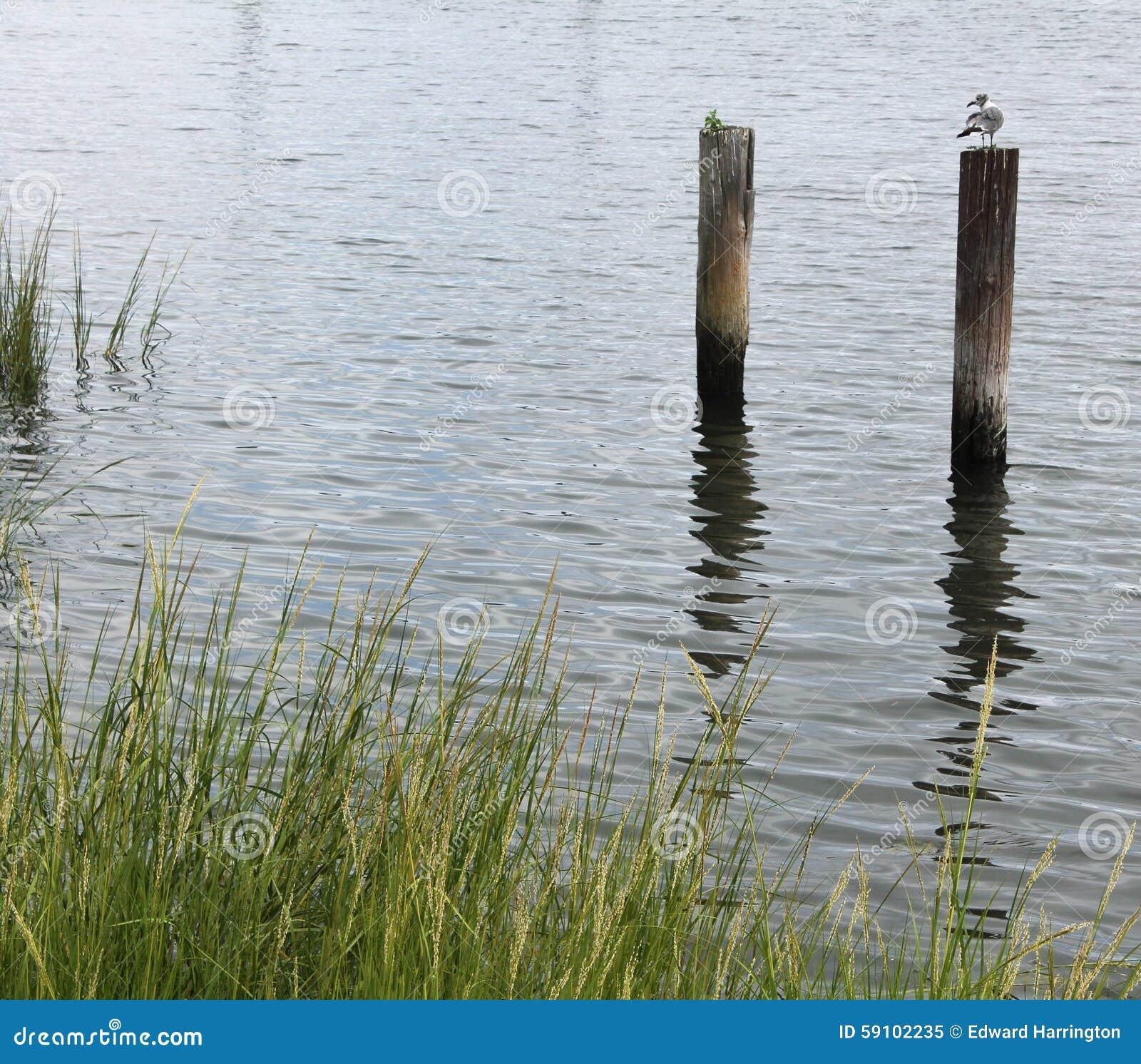 在定向塔栖息的海鸥