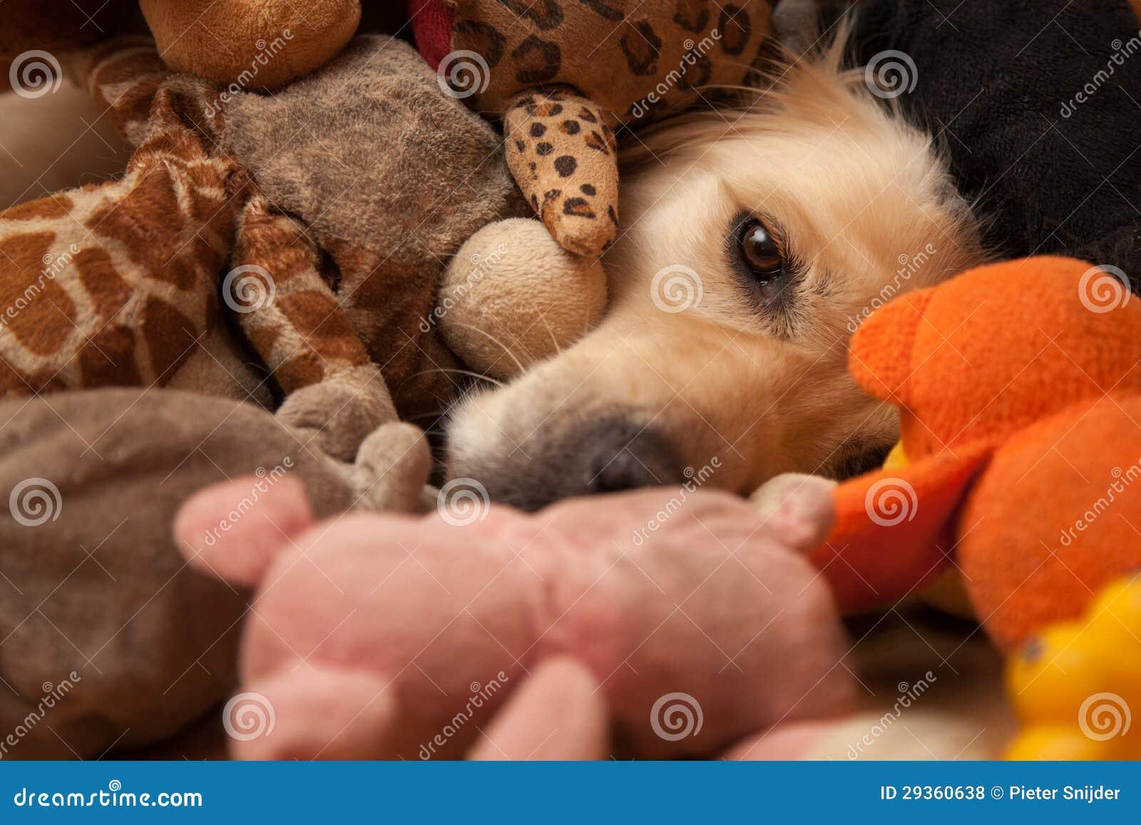 在宠物玩具之间的狗