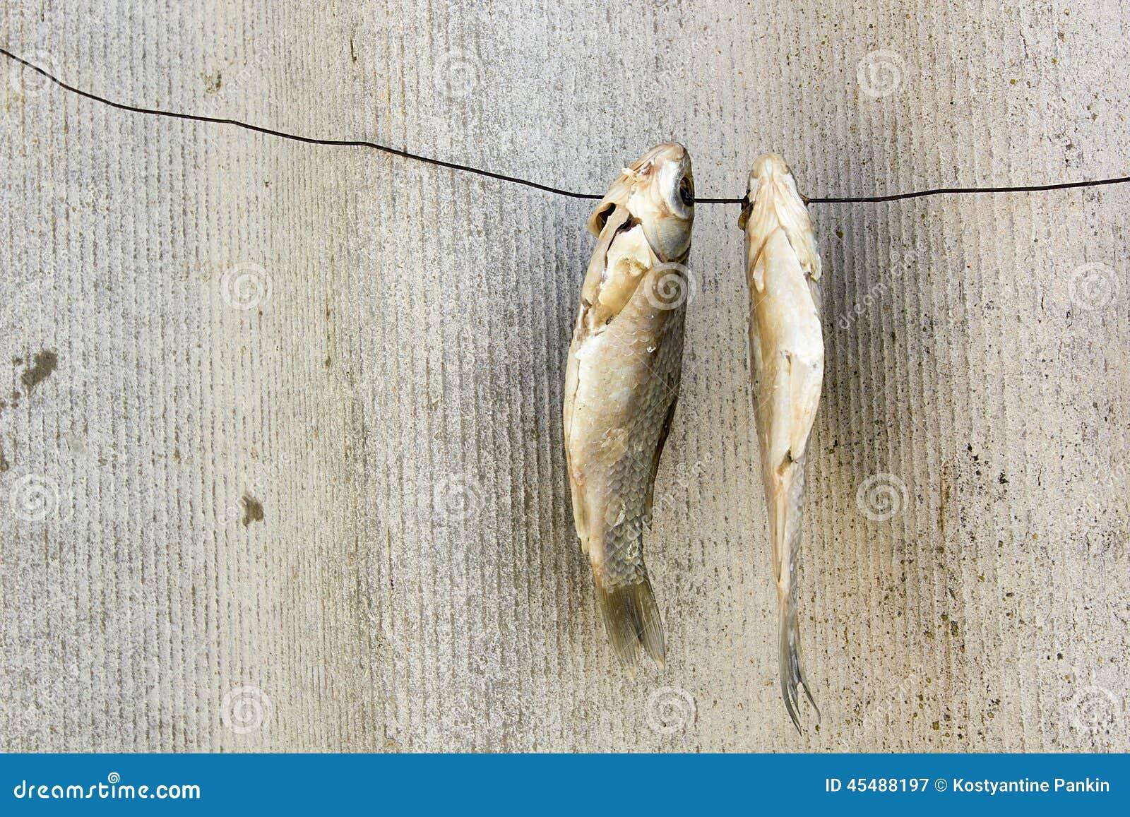 在导线的干鱼