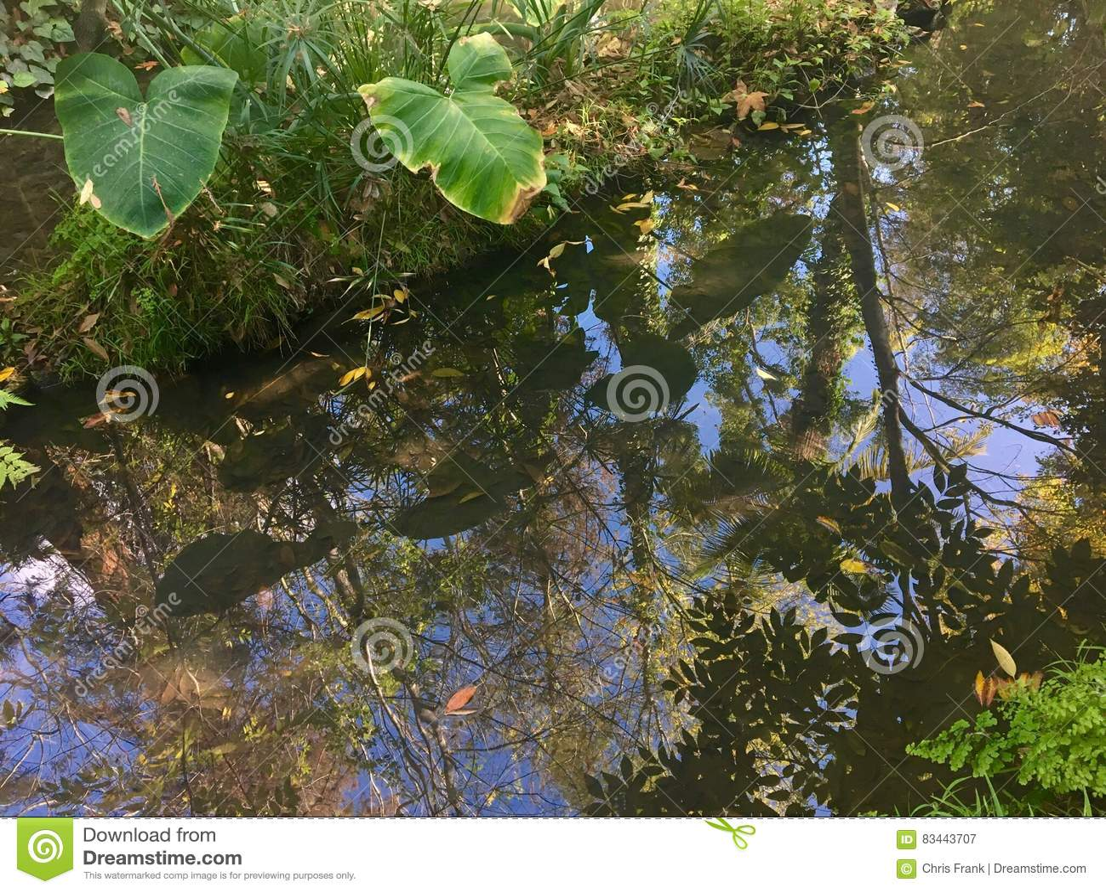 在小河的雨林反射