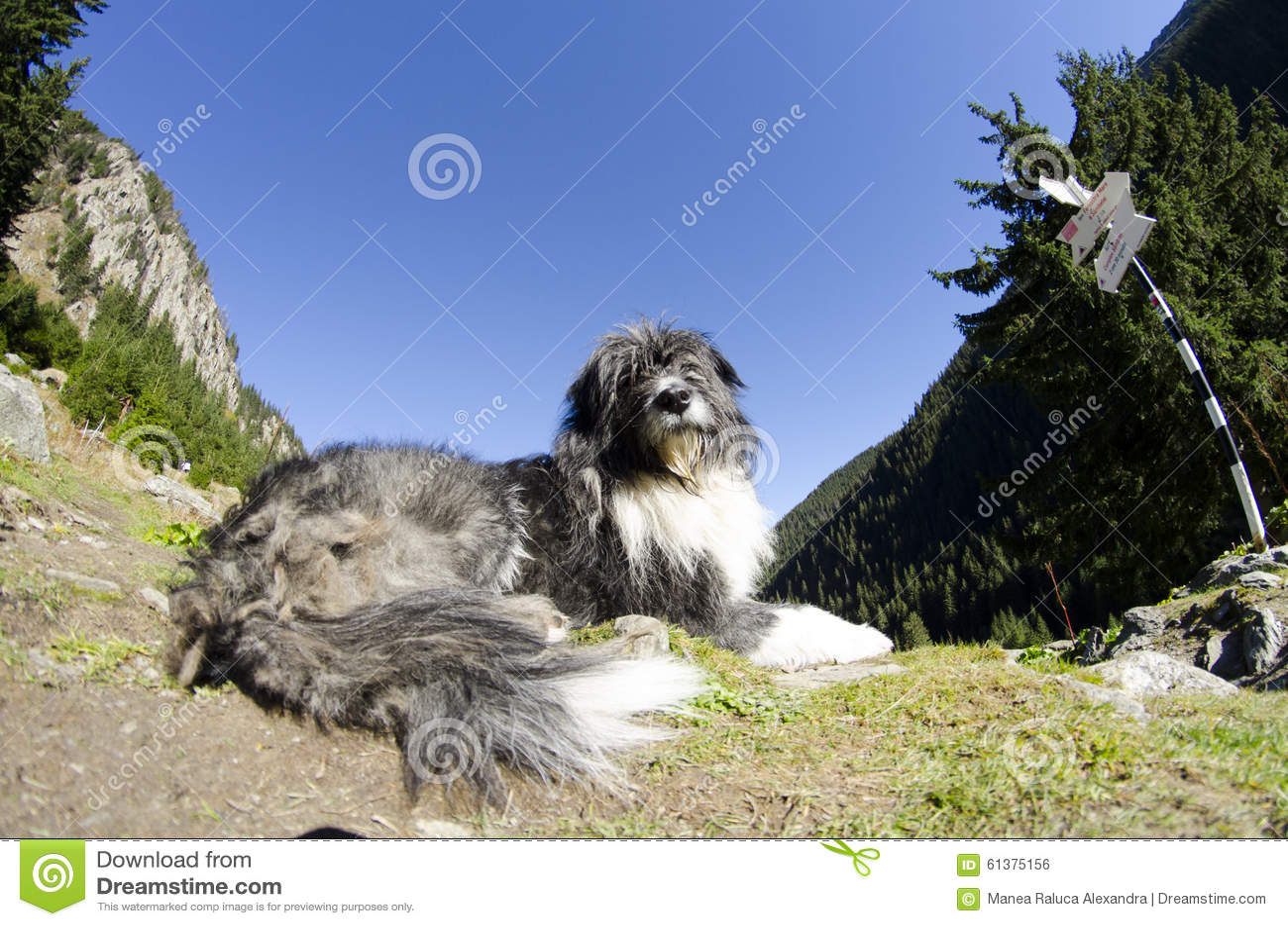 在山守卫的狗