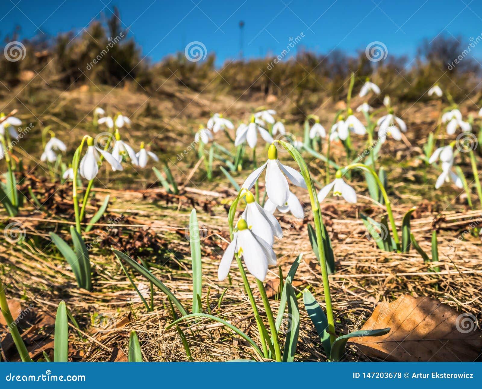 在山沼地的白花