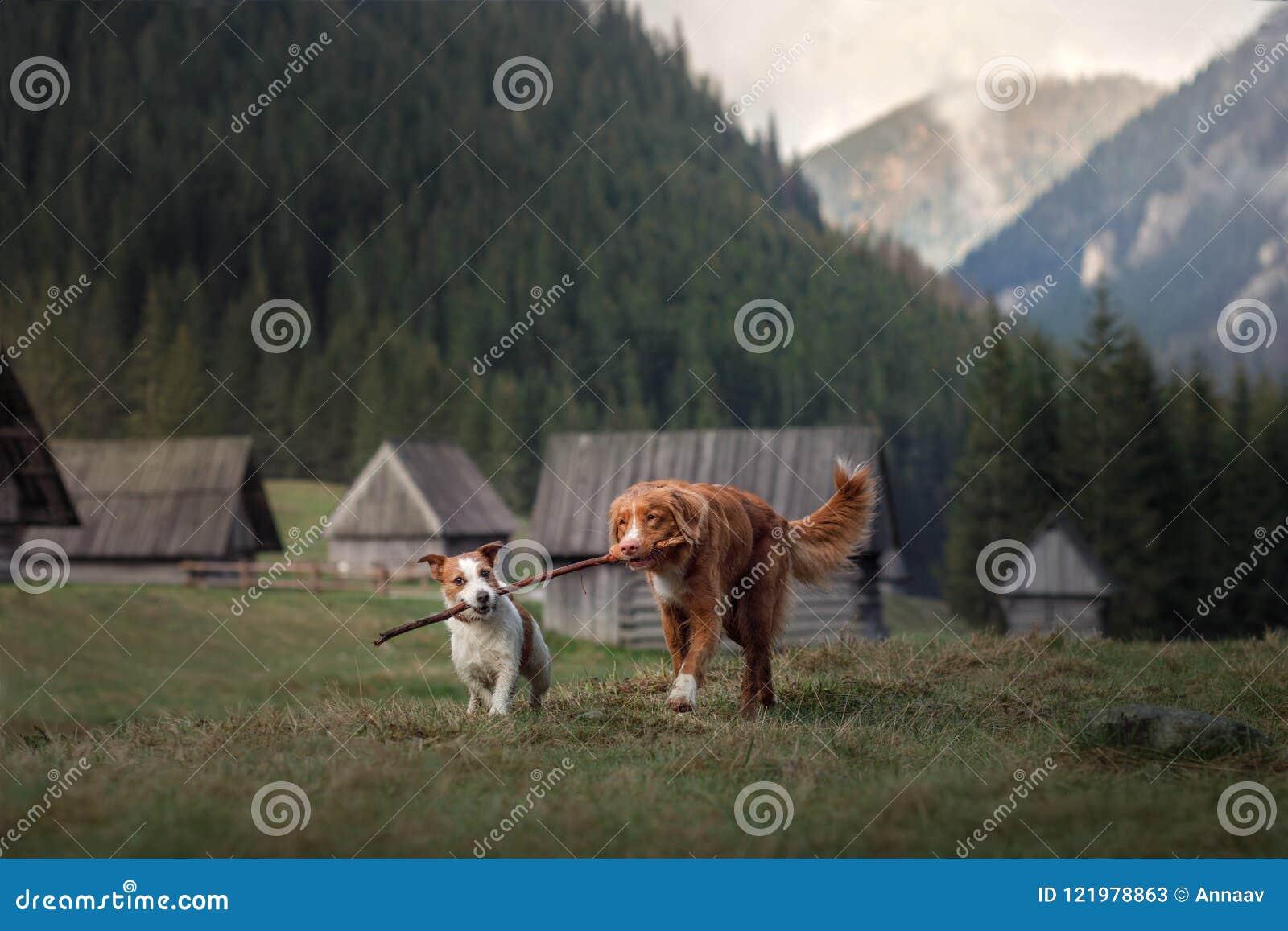 在山的一条狗 旅行与宠物 健康生活方式