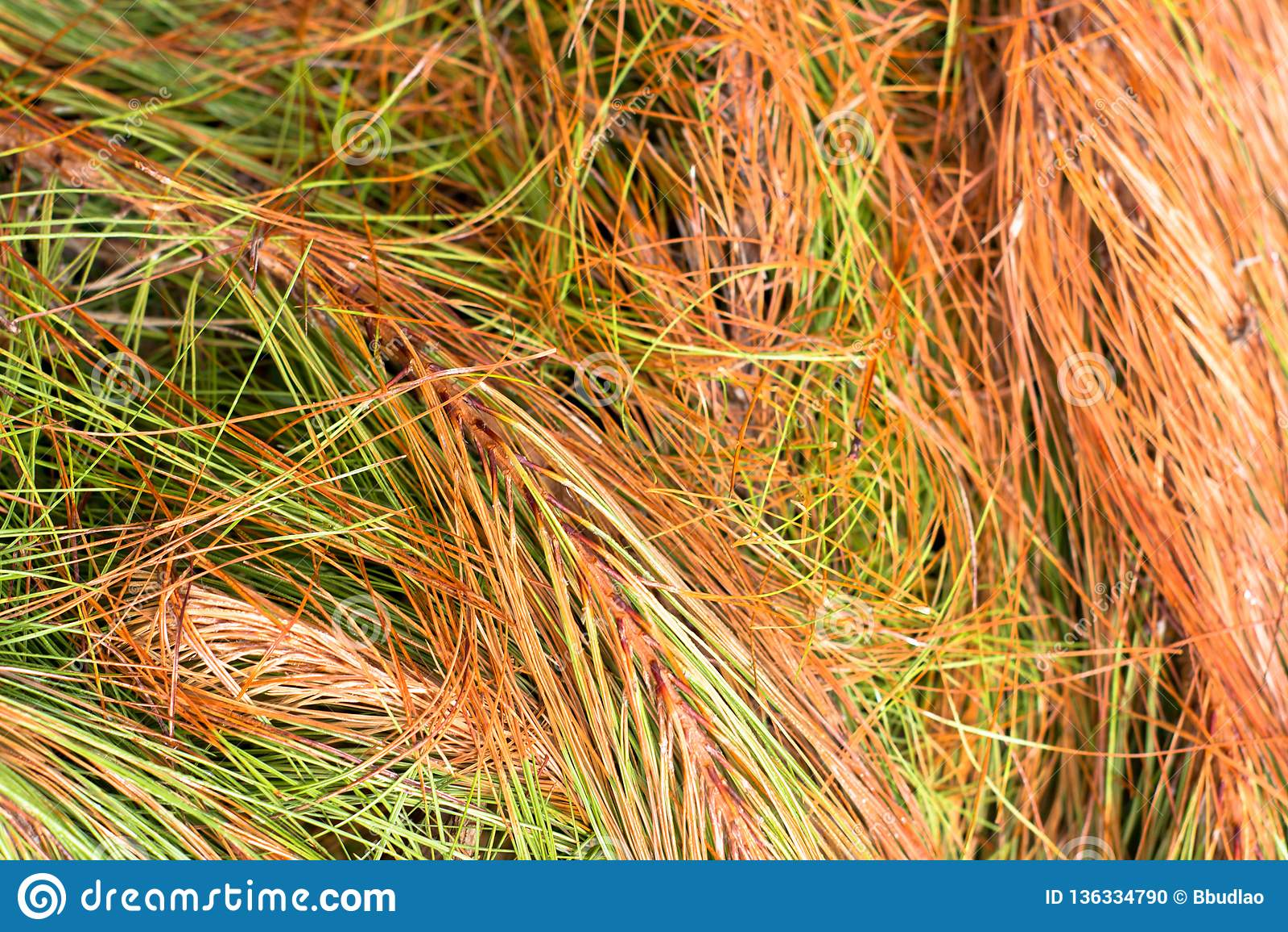 在山的五颜六色的野草