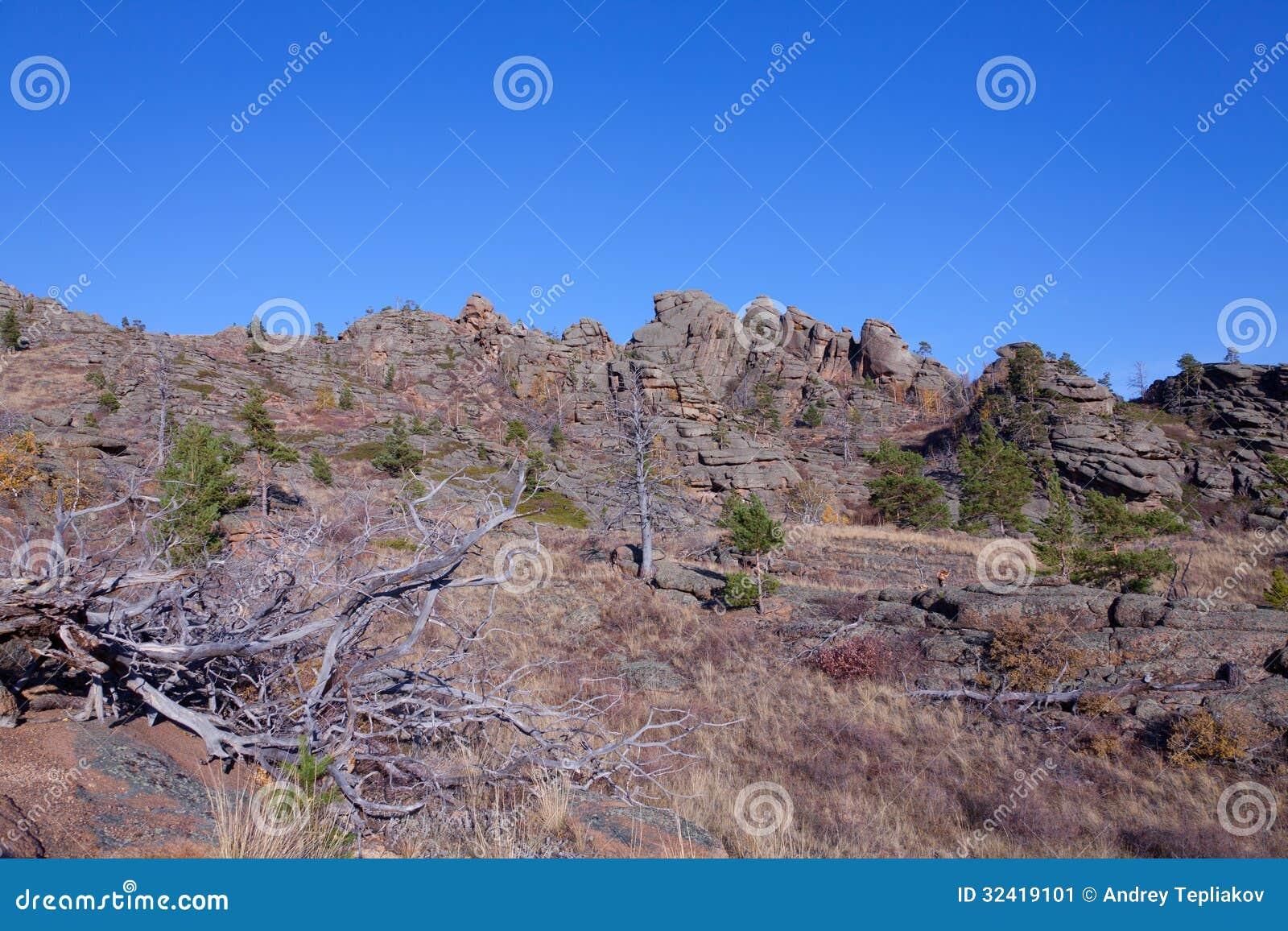 在山的干树