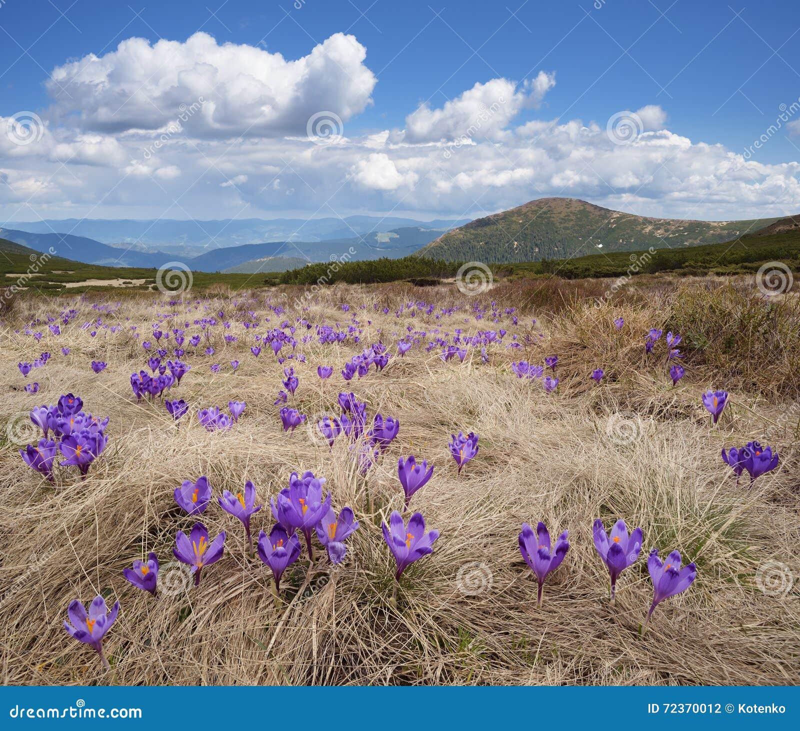 在山的春天花
