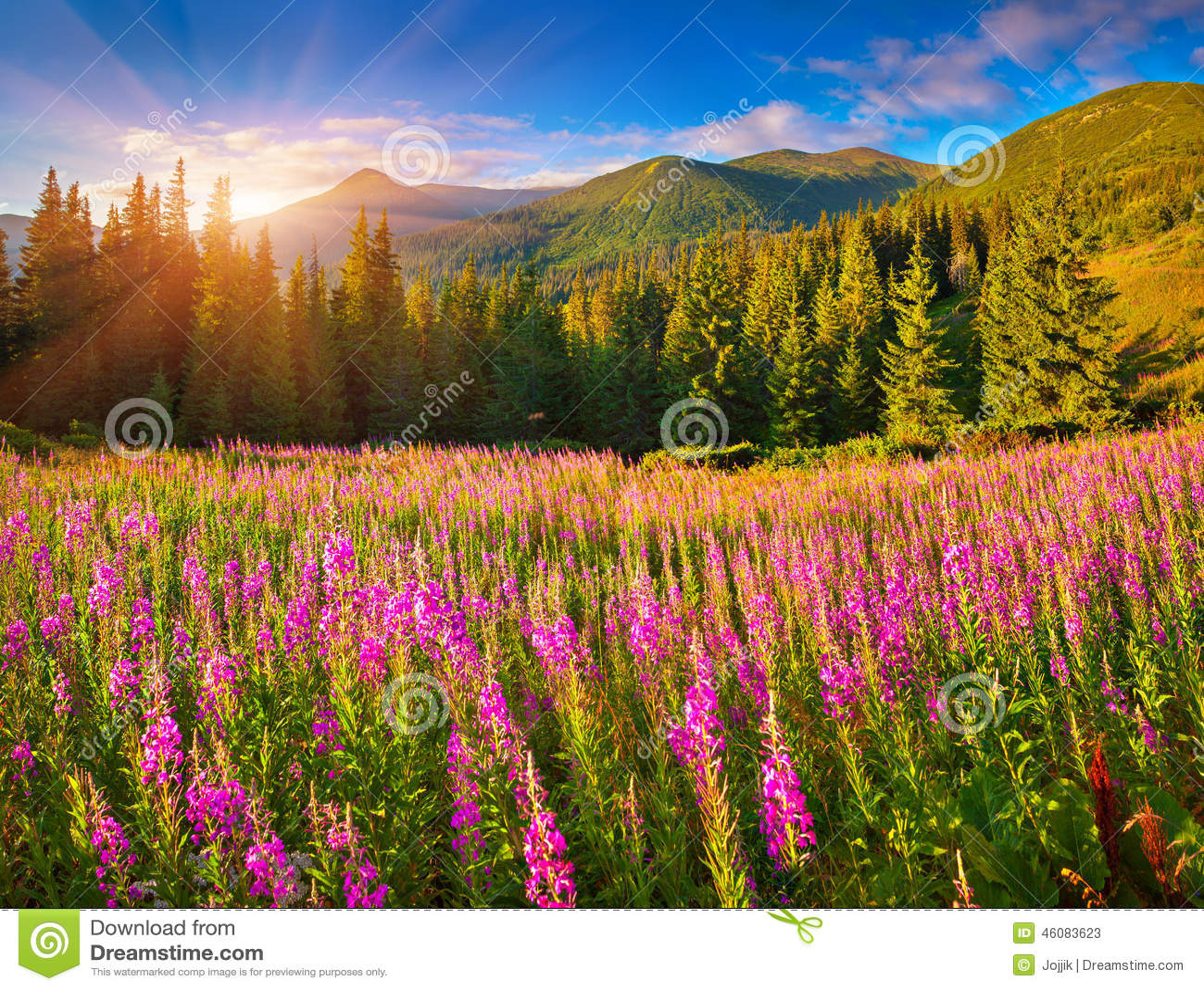 在山的美好的秋天风景与桃红色花