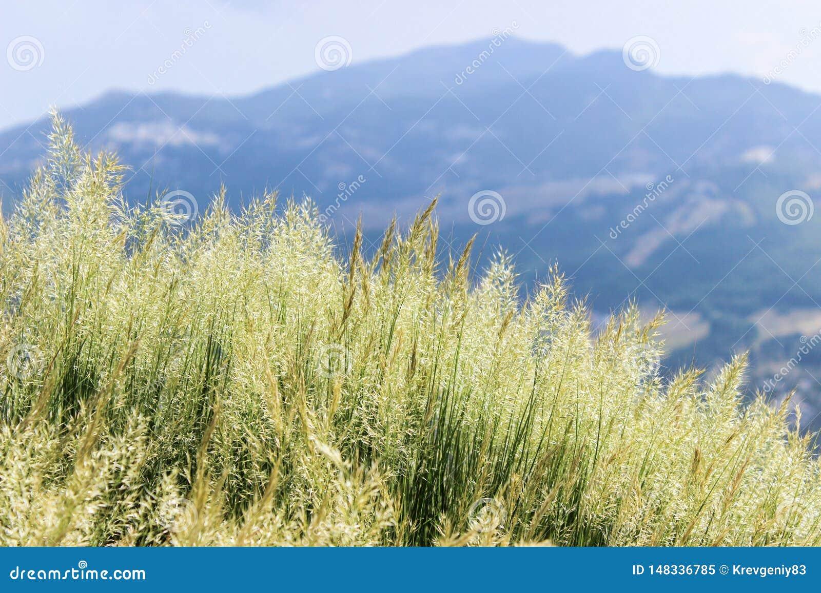 在山腰的草