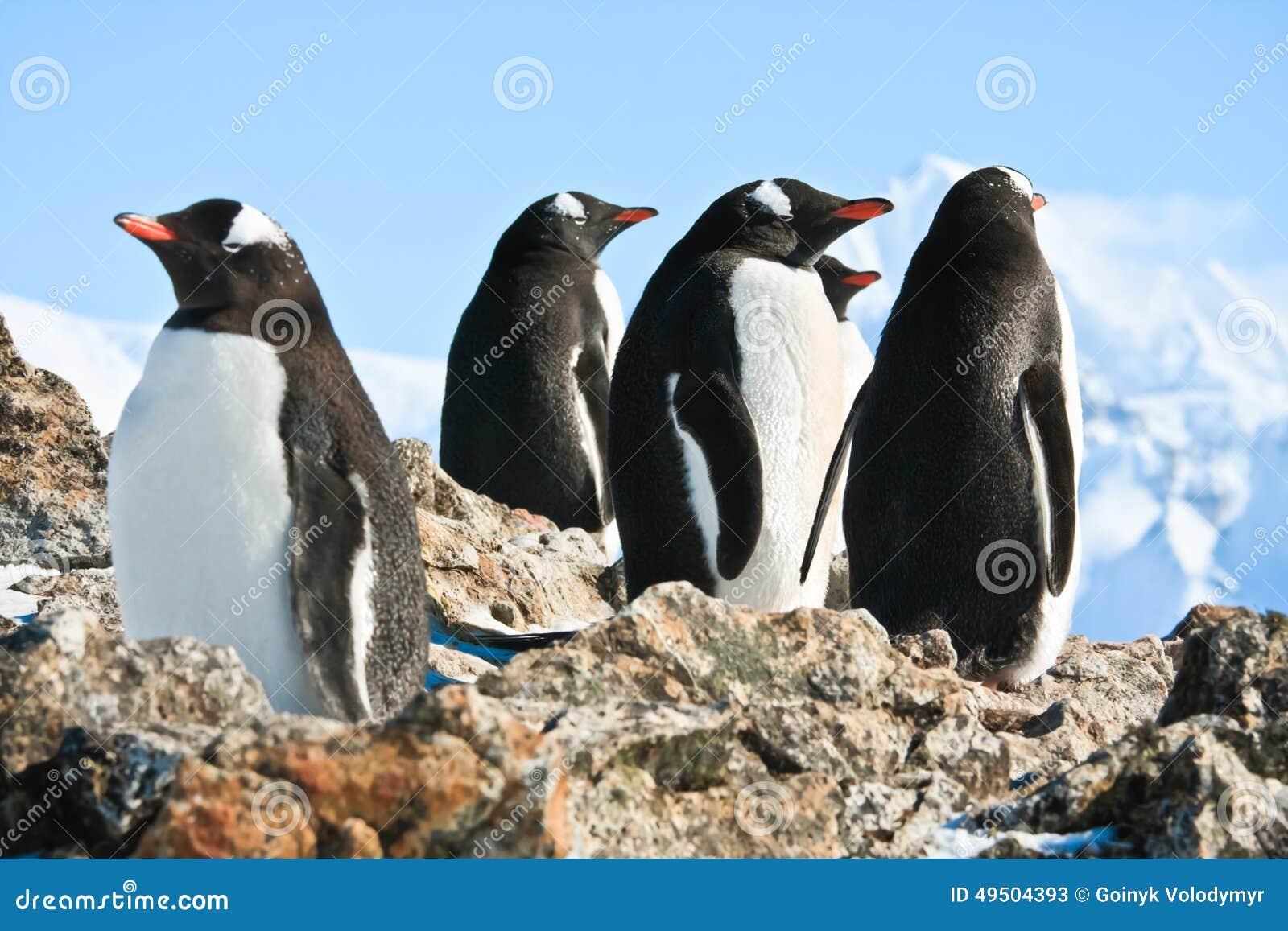 在岩石的企鹅